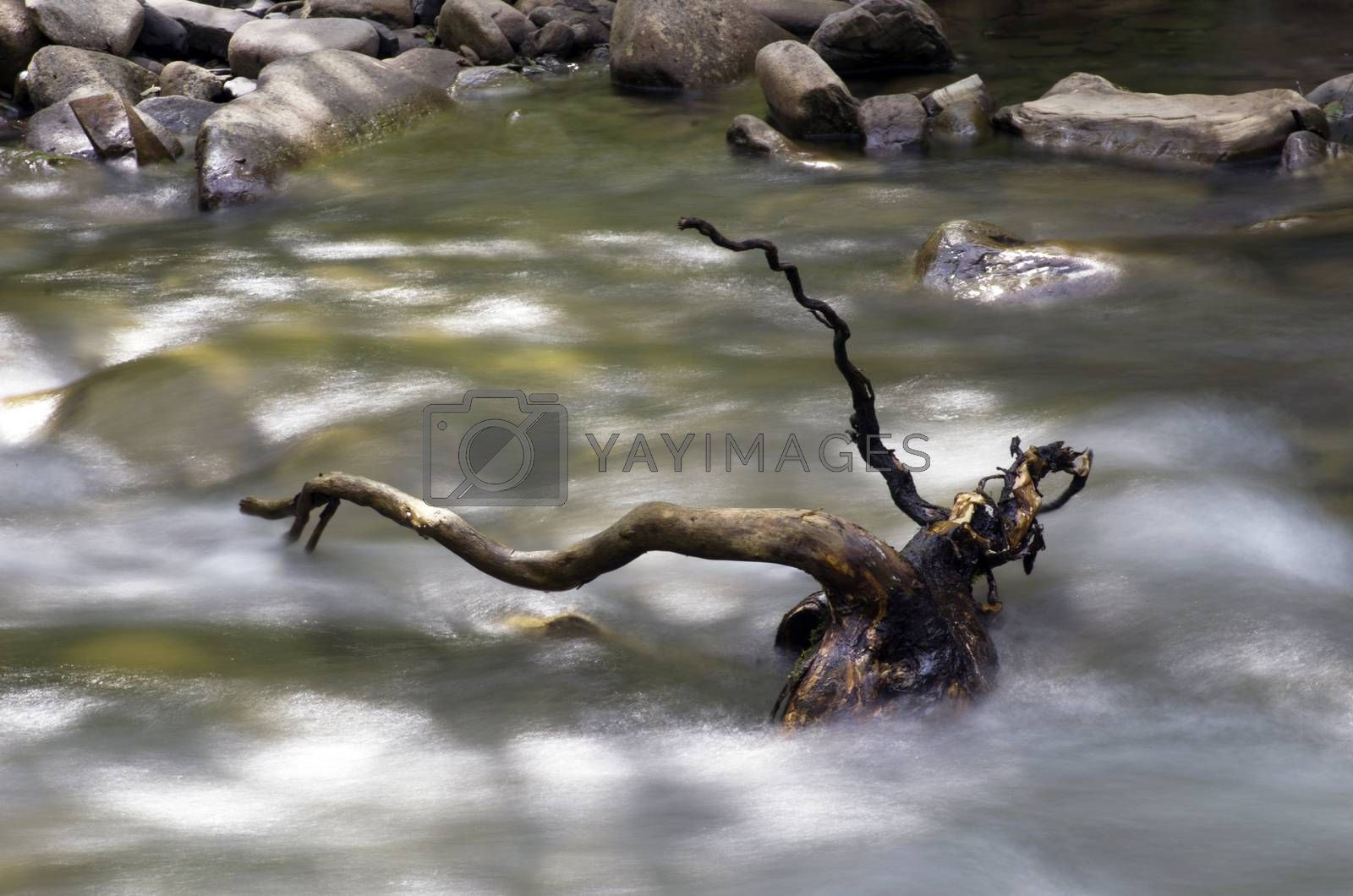 Royalty free image of mountain river. Beauty wild nature landscape by dolnikow