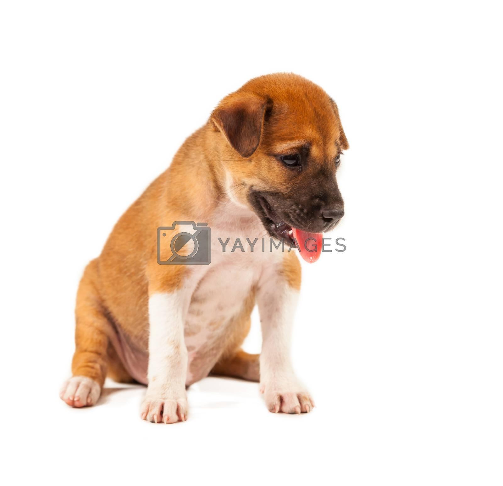 Puppy Dog by witthaya