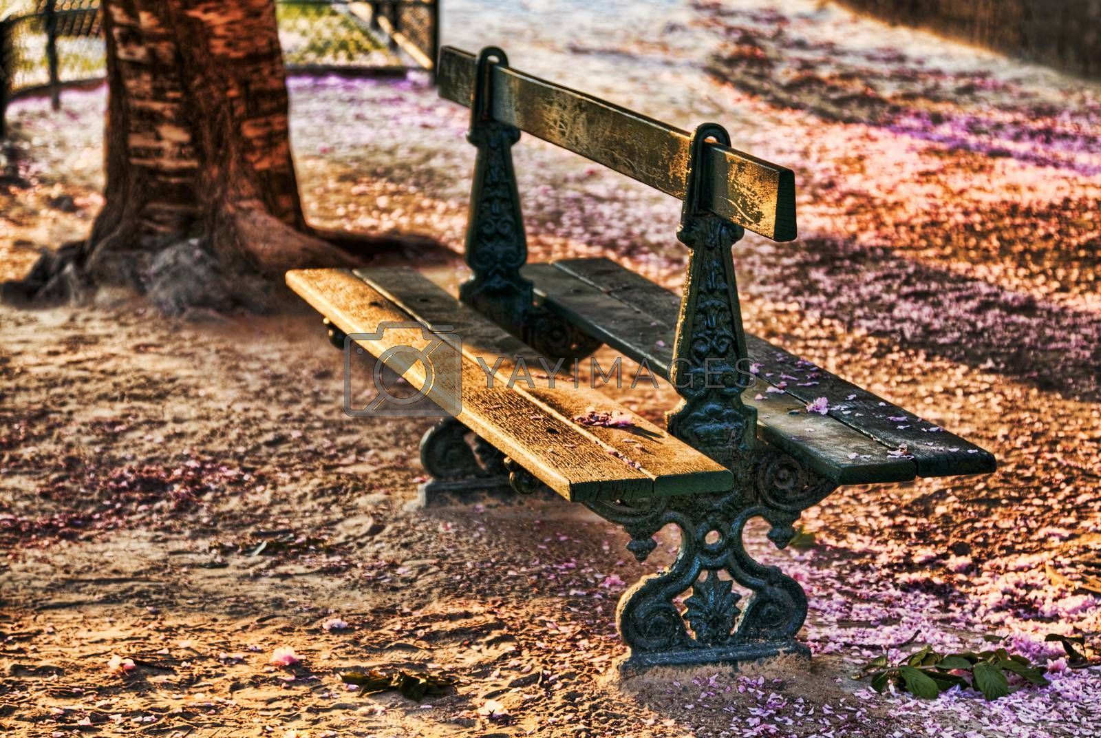 Image of an empty bench in a park in spring.