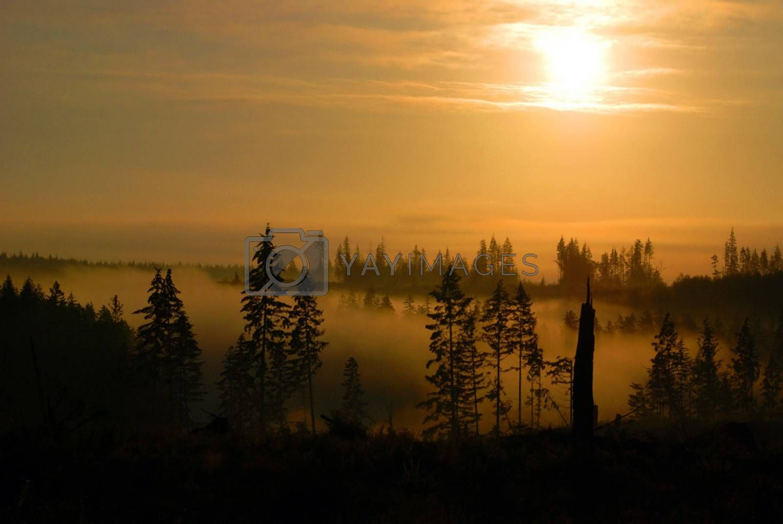Royalty free image of Scenic Sunrise by tim_rones
