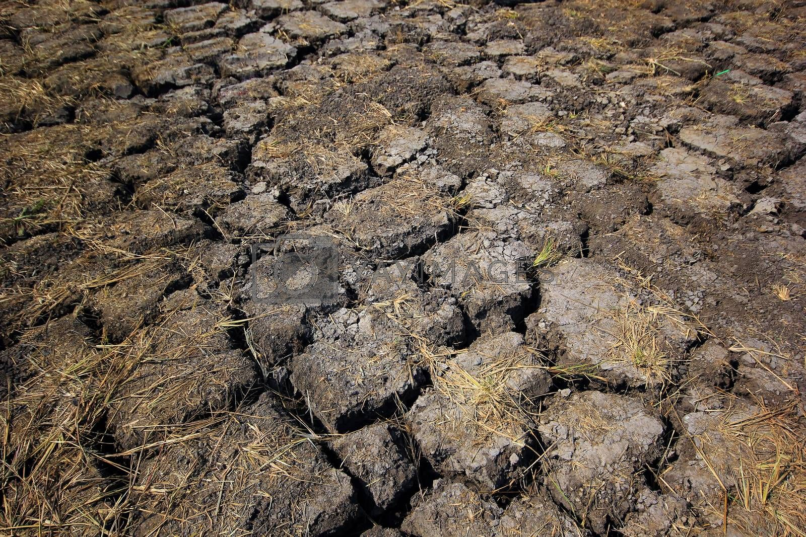 Royalty free image of Dry cracked earth by leisuretime70