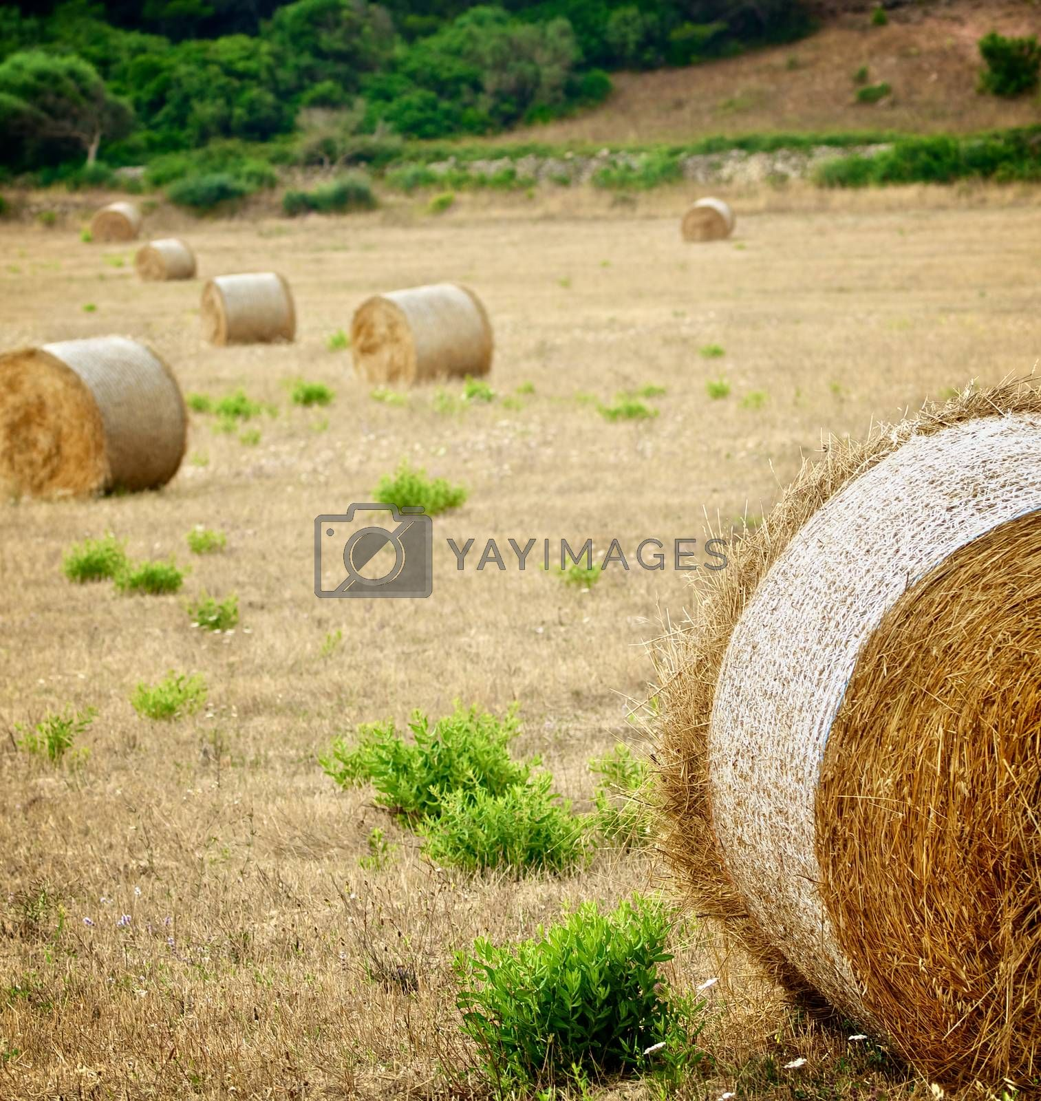 Royalty free image of Straw Bales by zhekos