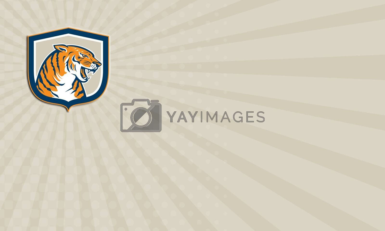 Royalty free image of Business card Angry Tiger Head Sitting Growling Shield Retro by patrimonio
