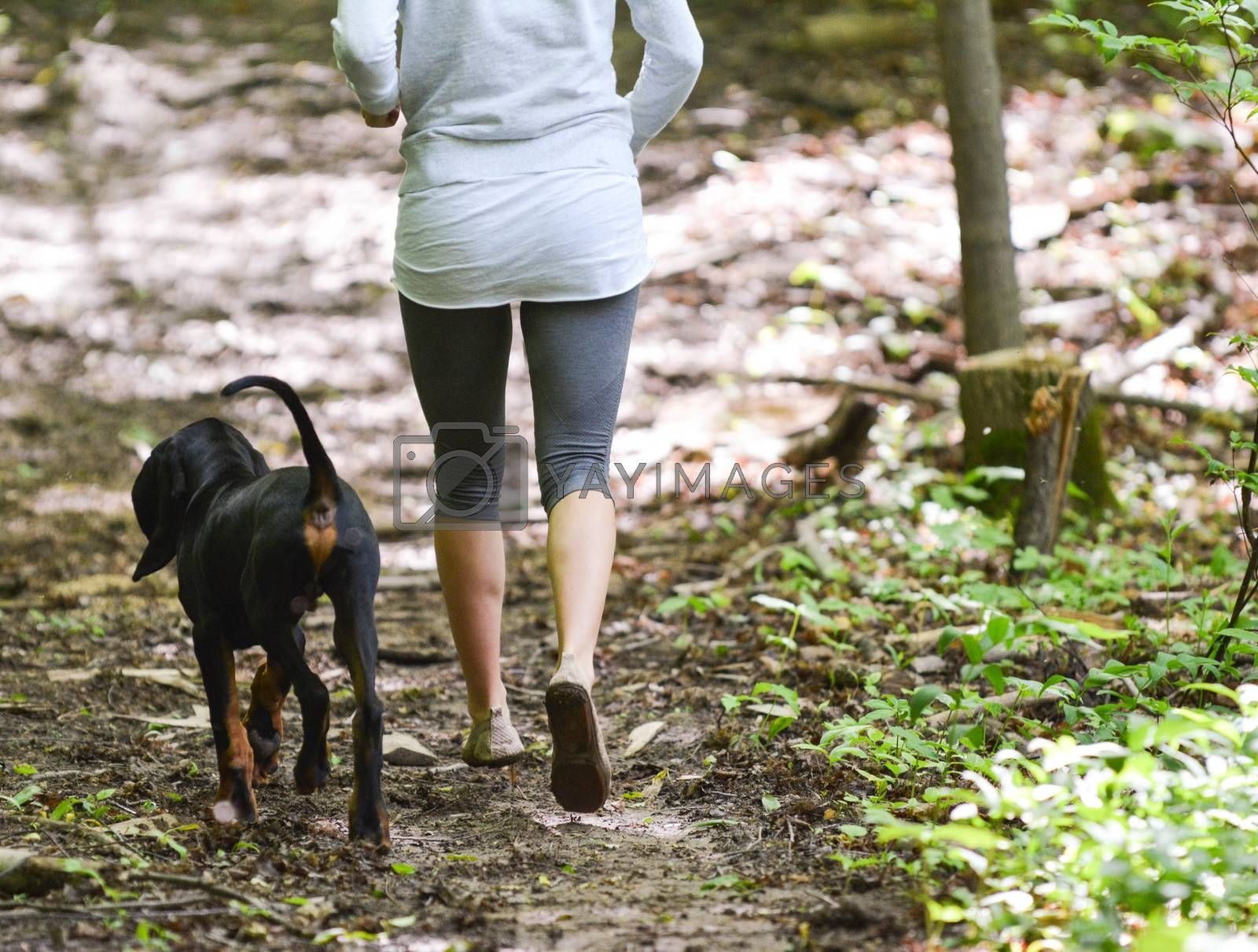 Royalty free image of exercising the dog by willeecole123