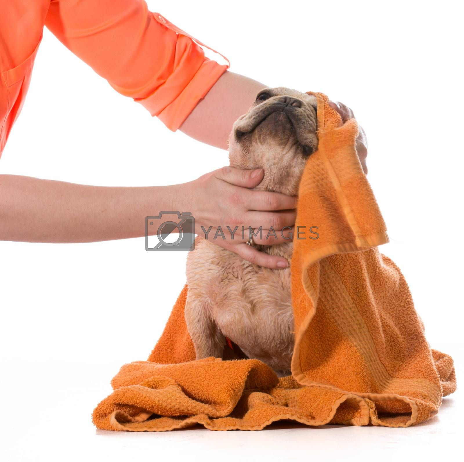 Royalty free image of dog bath by willeecole123