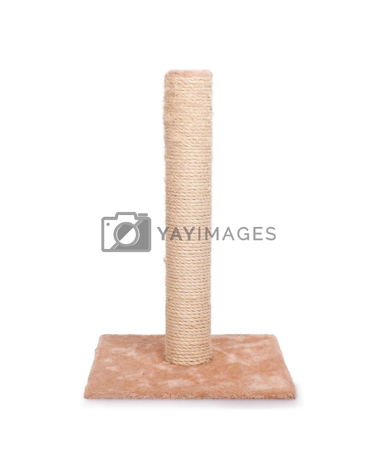 Royalty free image of Cat scratching post by michaklootwijk