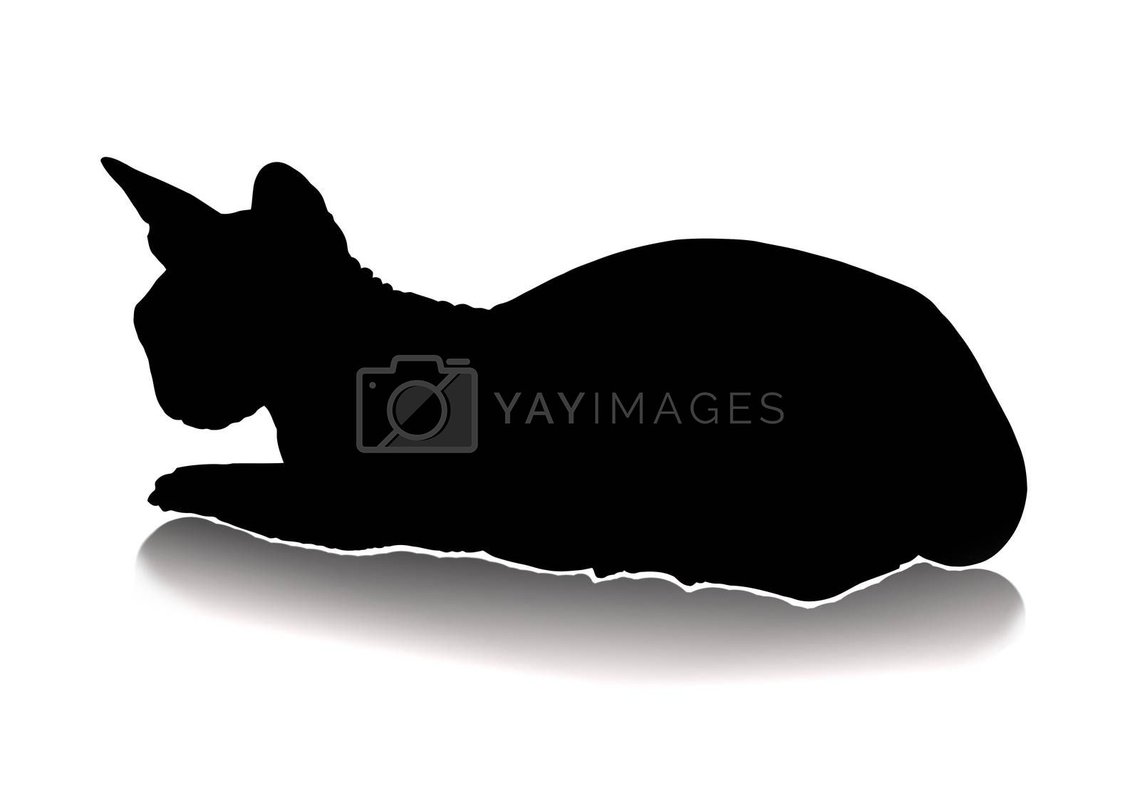 Royalty free image of cat silhouette by zhannaprokopeva