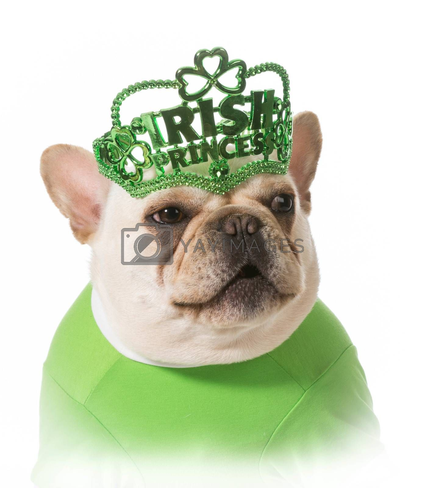 Royalty free image of St Patricks Day dog by willeecole123
