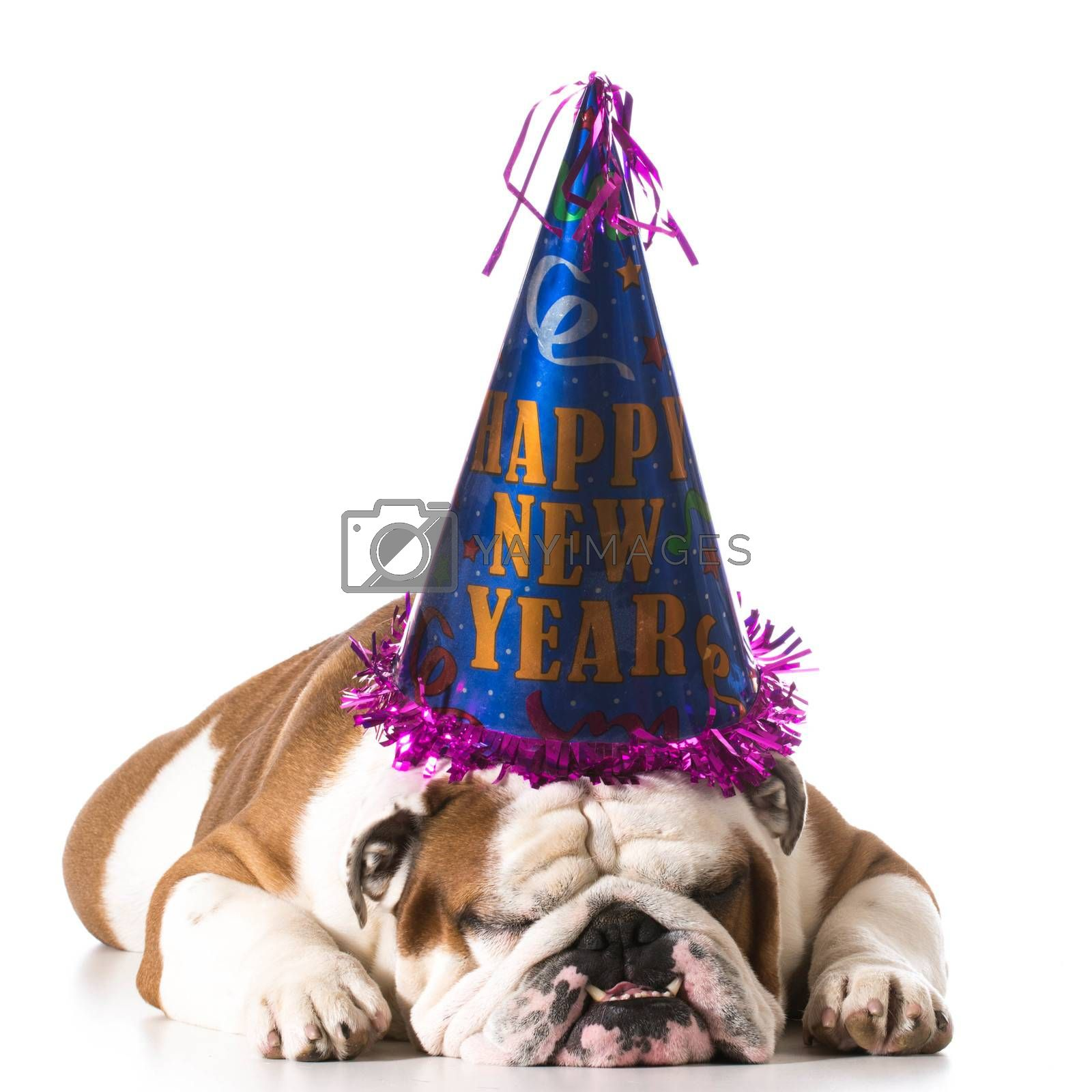 Royalty free image of happy new year dog by willeecole123