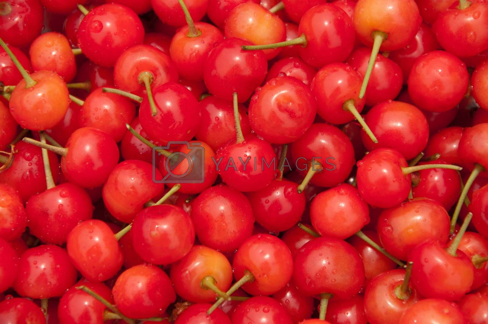 Royalty free image of cherries by jctabb