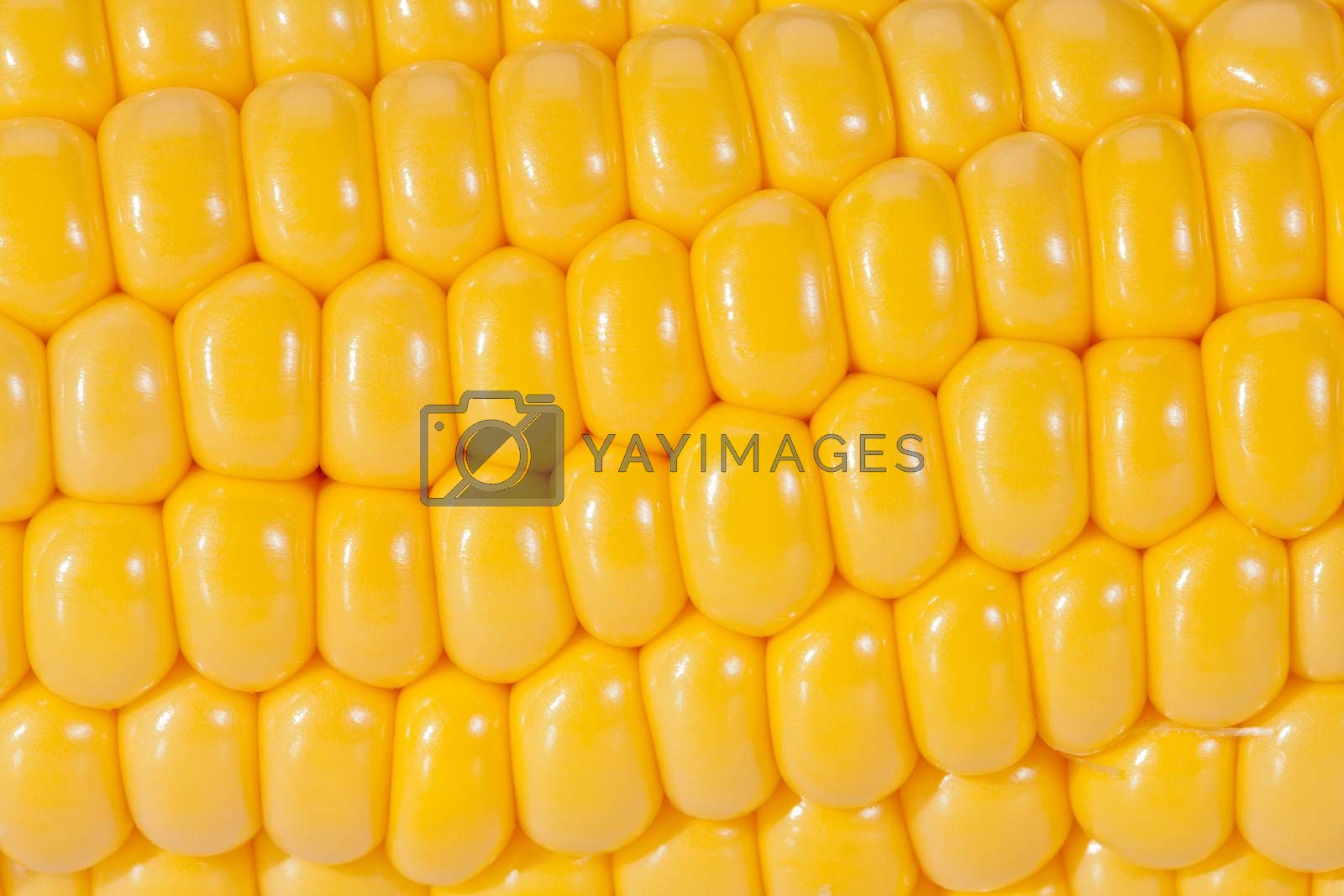 Royalty free image of background of yellow corn grains on the colb macro by mychadre77
