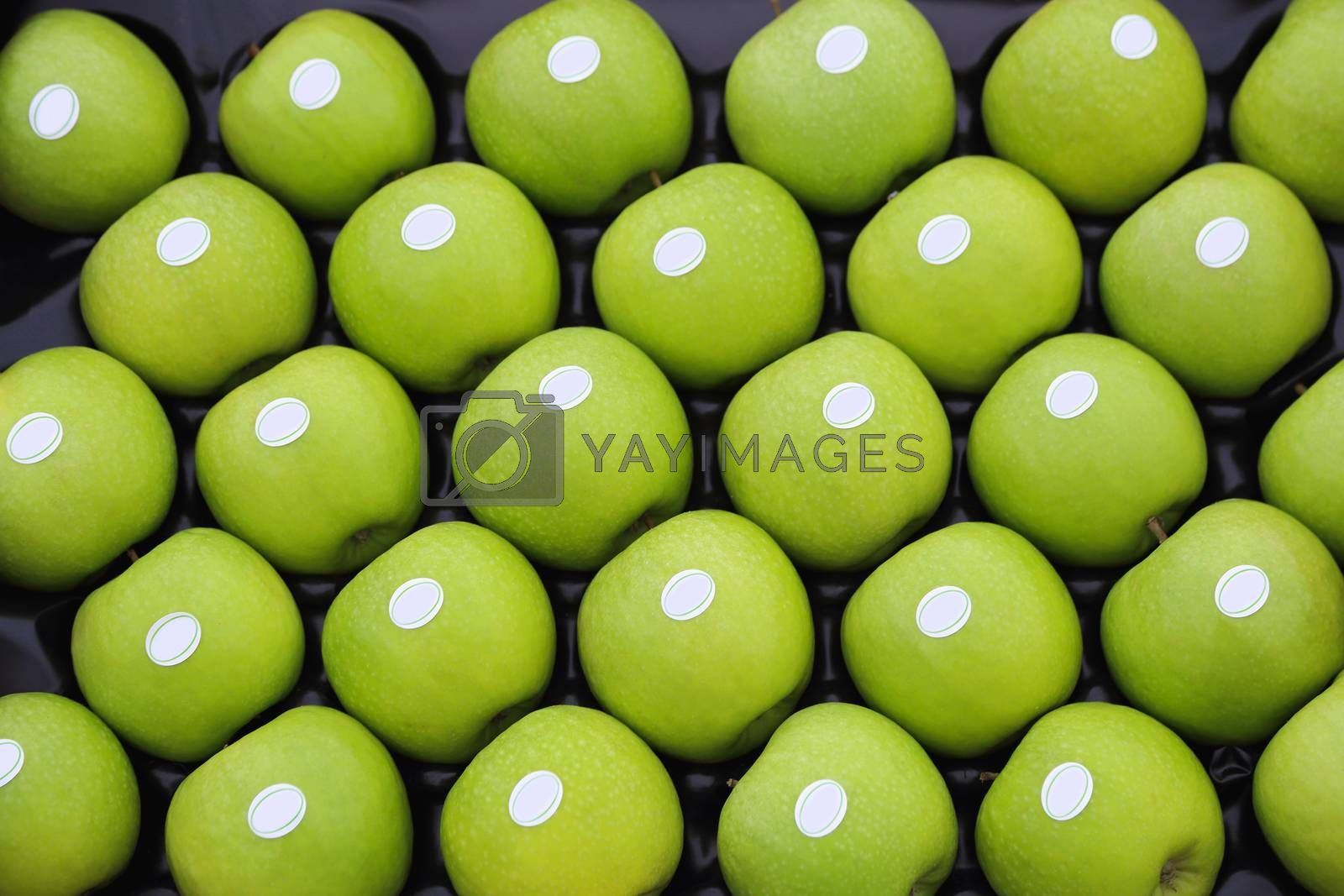 Royalty free image of Granny smith apples by Baloncici