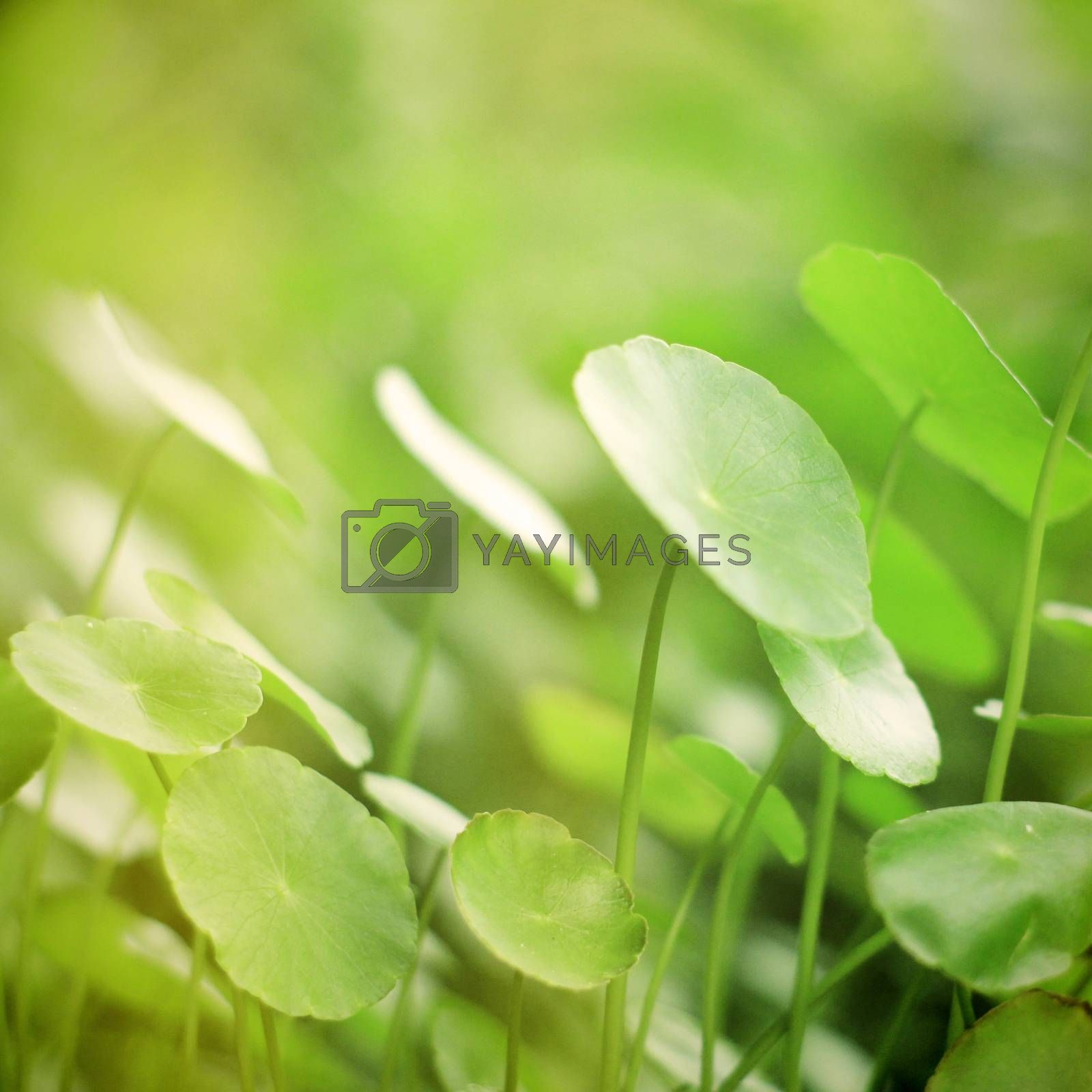 Green plant with retro filter effect