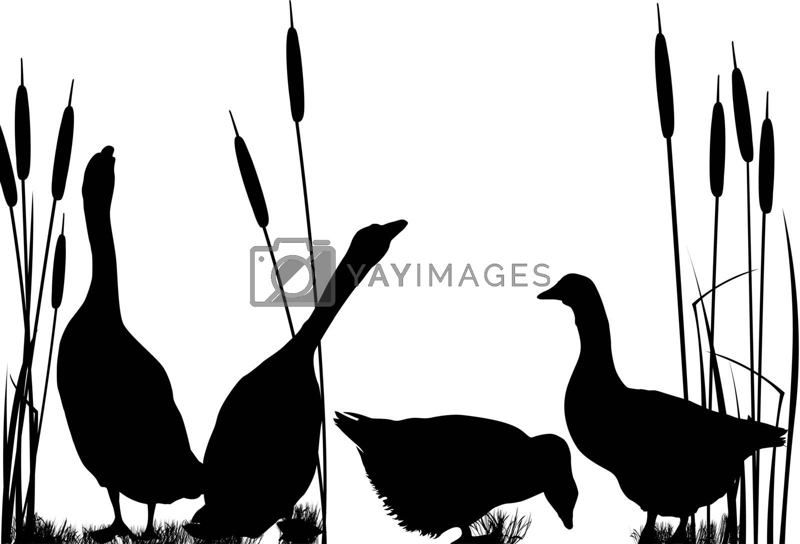 Goose silhouettes over white background