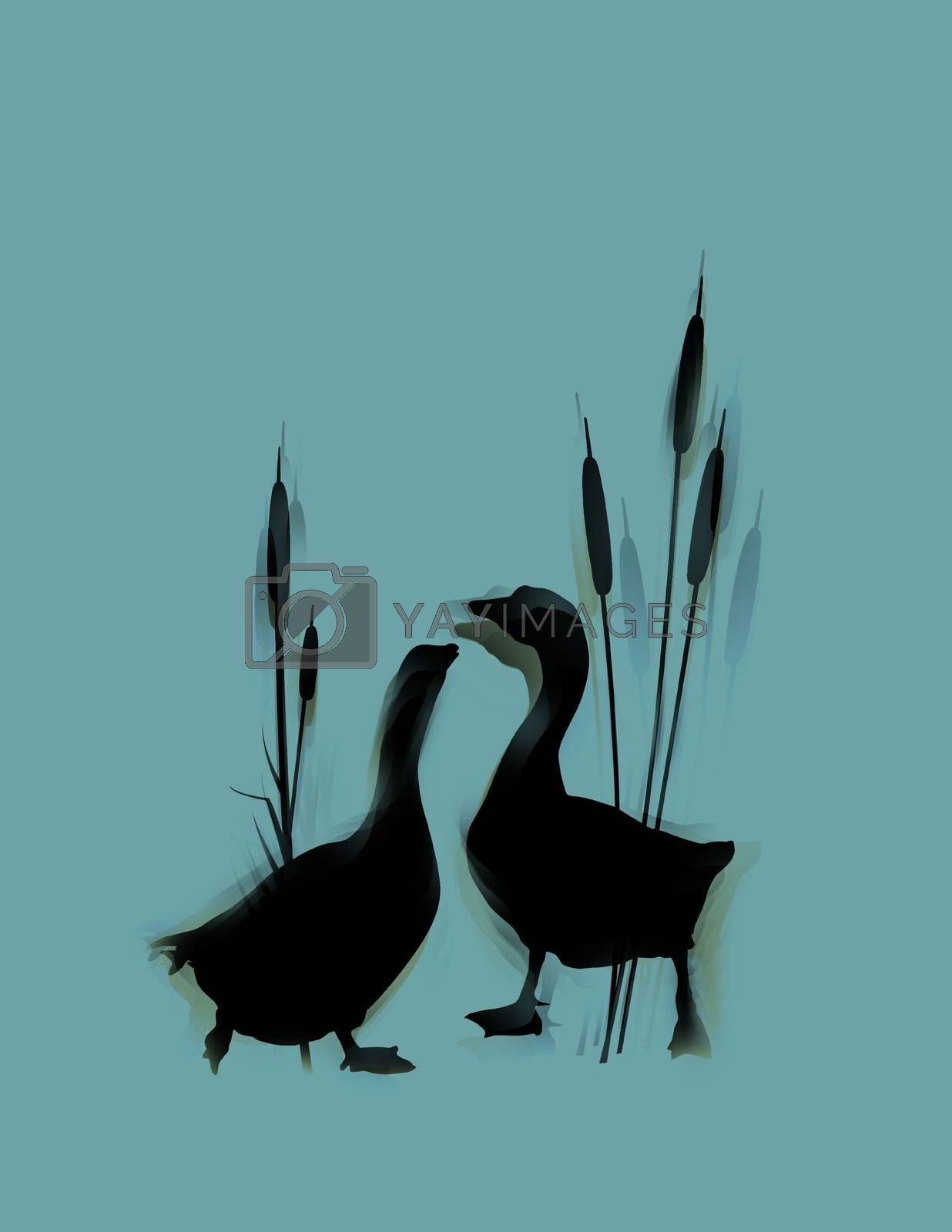 Romantic wildlife background with wild gooses couple