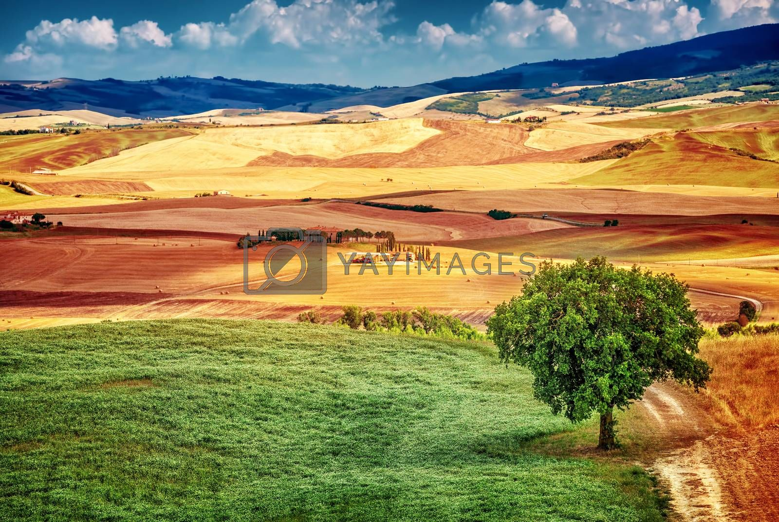 Beautiful autumnal landscape, amazing view on hills with dry golden wheat plantation, panoramic countryside, beauty of nature concept