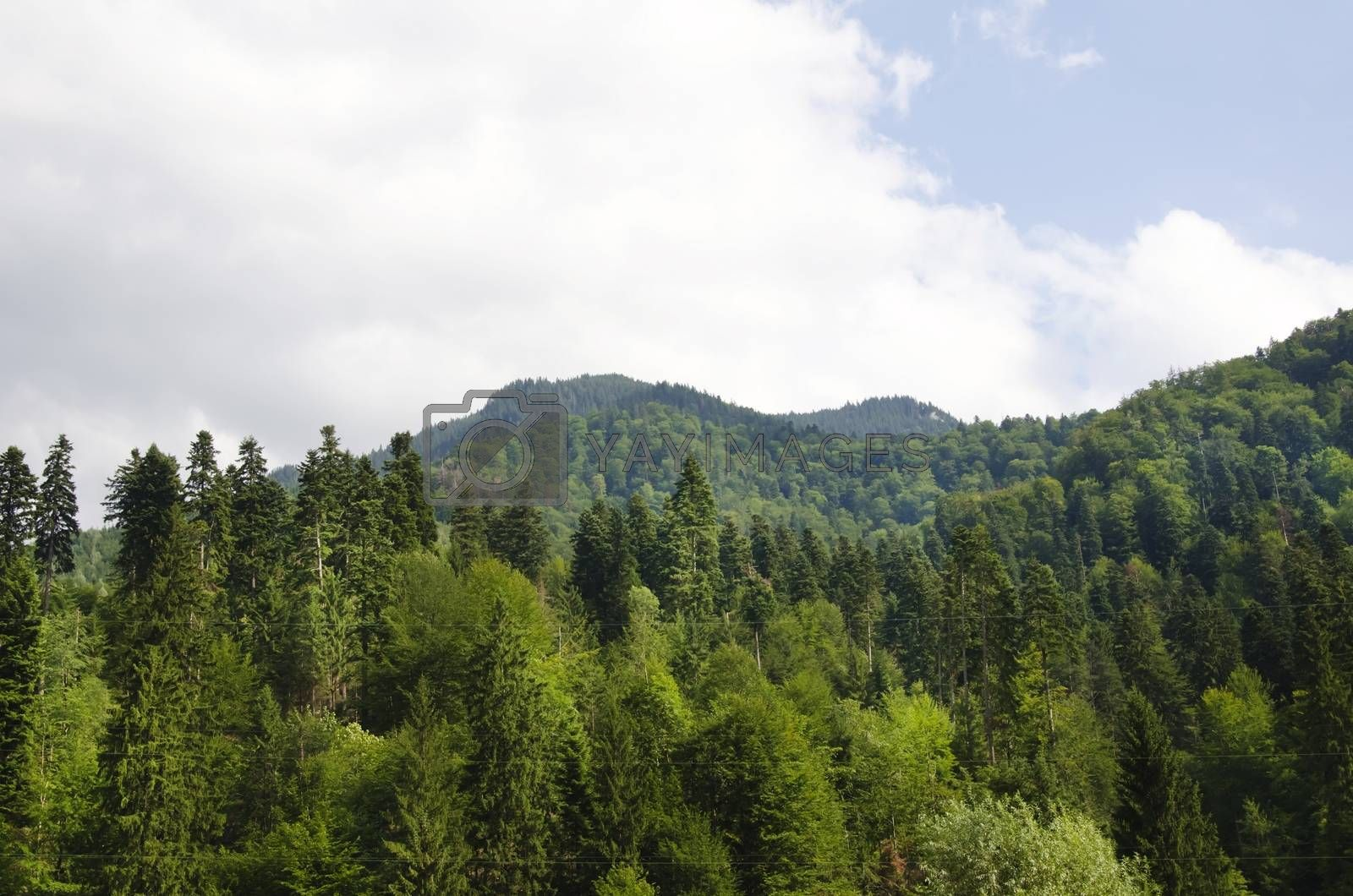 Photo of The Forest and Mountains Over Cloudy Sky