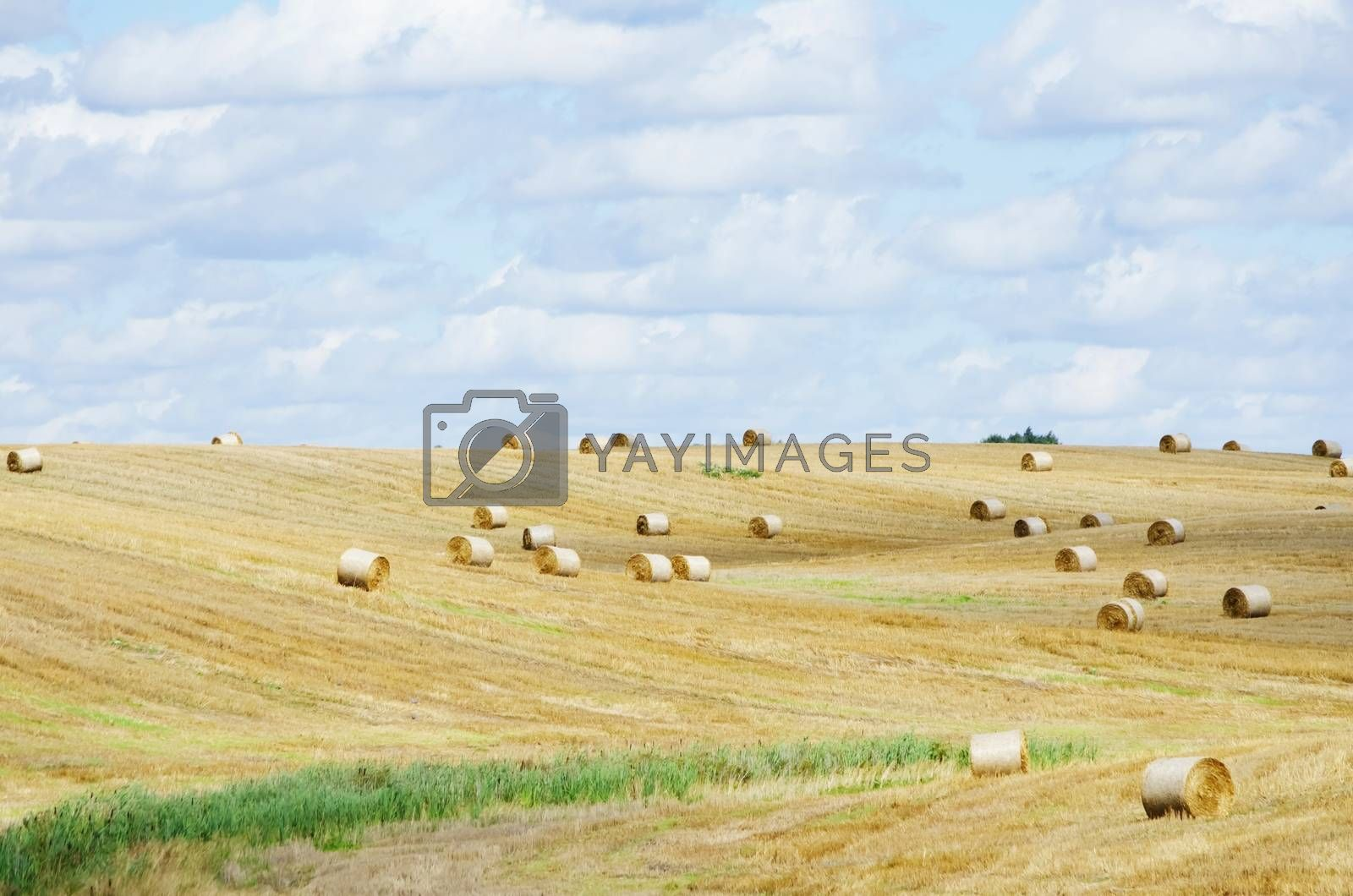 Autumn Agricultural Farm Field in Sunny Day