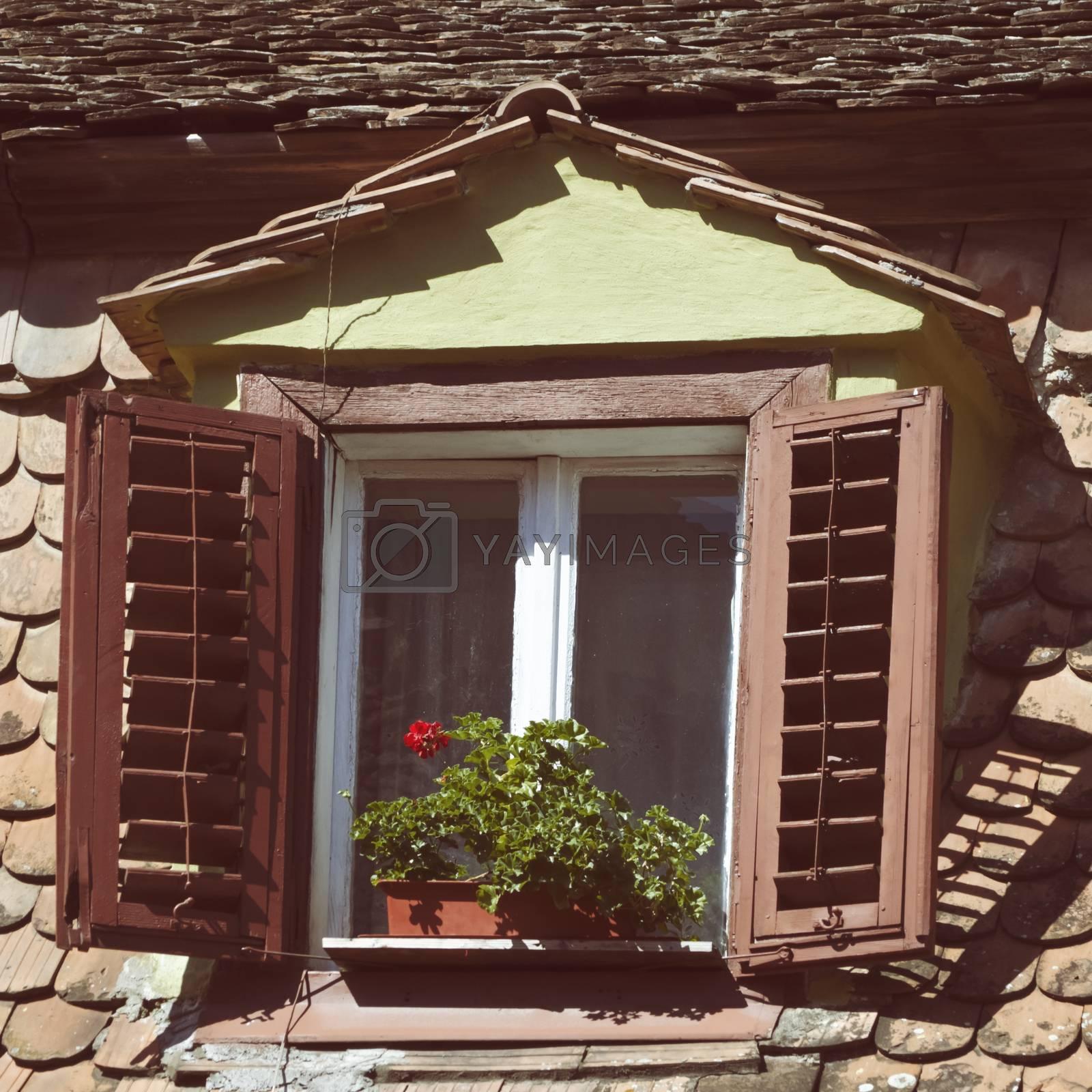 Window by razvodovska