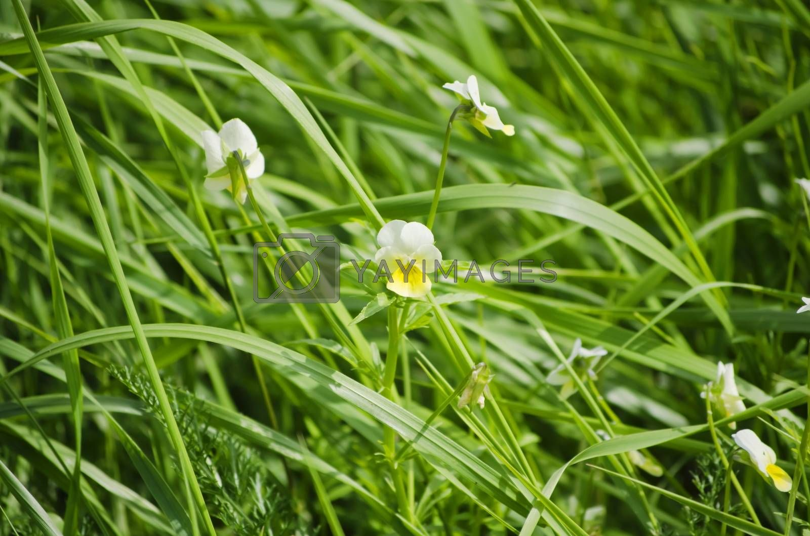 Photo of The Spring or Summer Flower Over Natural Green