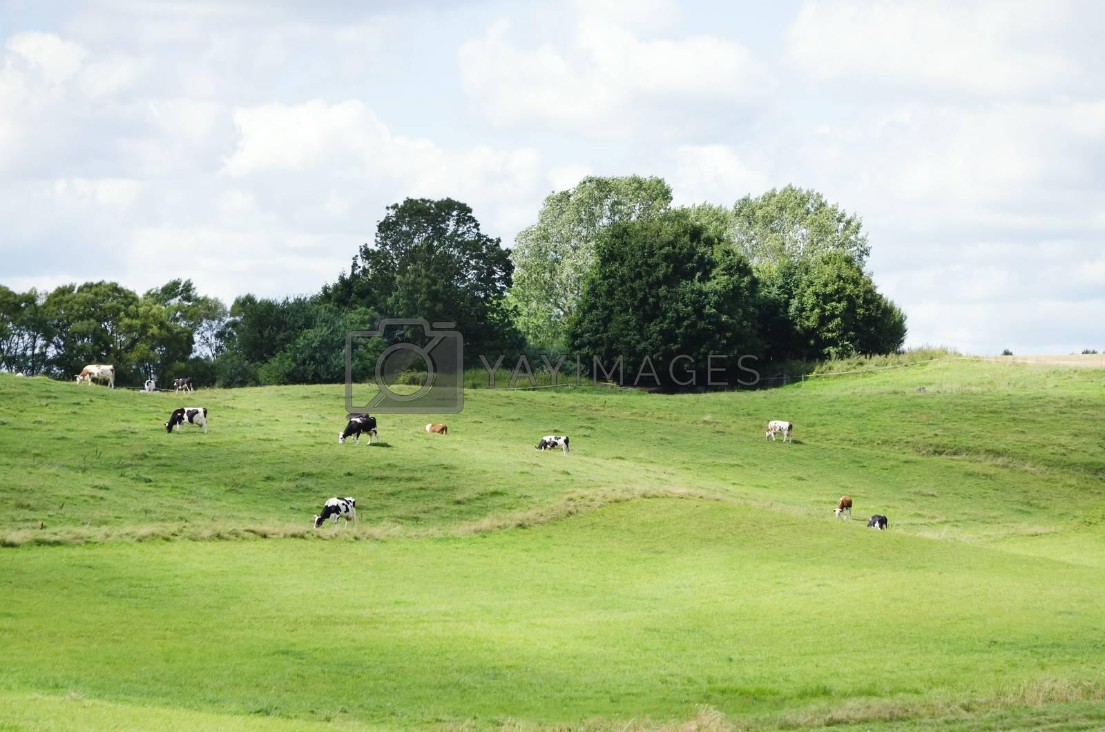 Farm Meadow With Cow by razvodovska