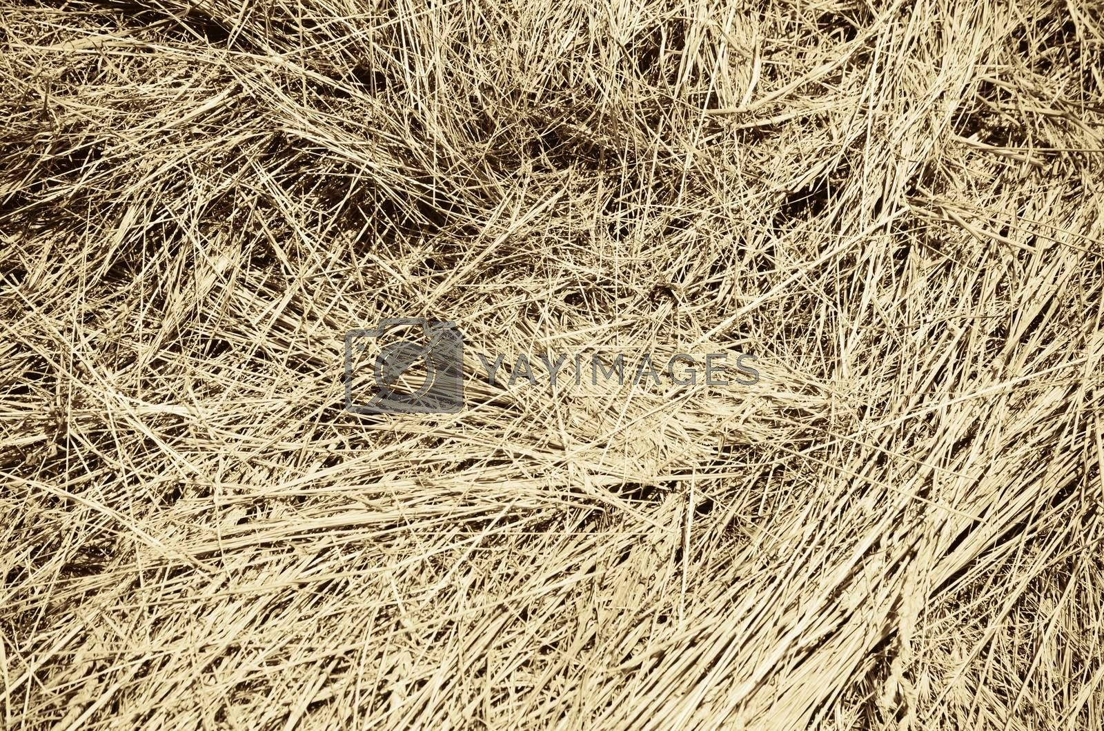Photo of The Hay Abstract  Background
