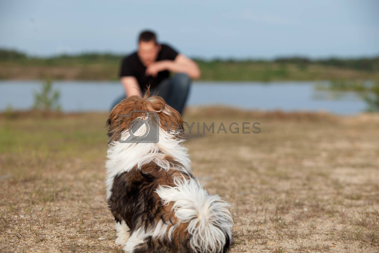 Puppy gets obedience training by DNFStyle