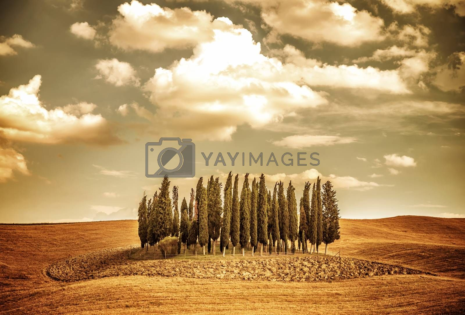 Beautiful autumn vintage landscape, several lonely trees in golden dry field, beauty of autumnal nature, Tuscany countryside panorama, Italy