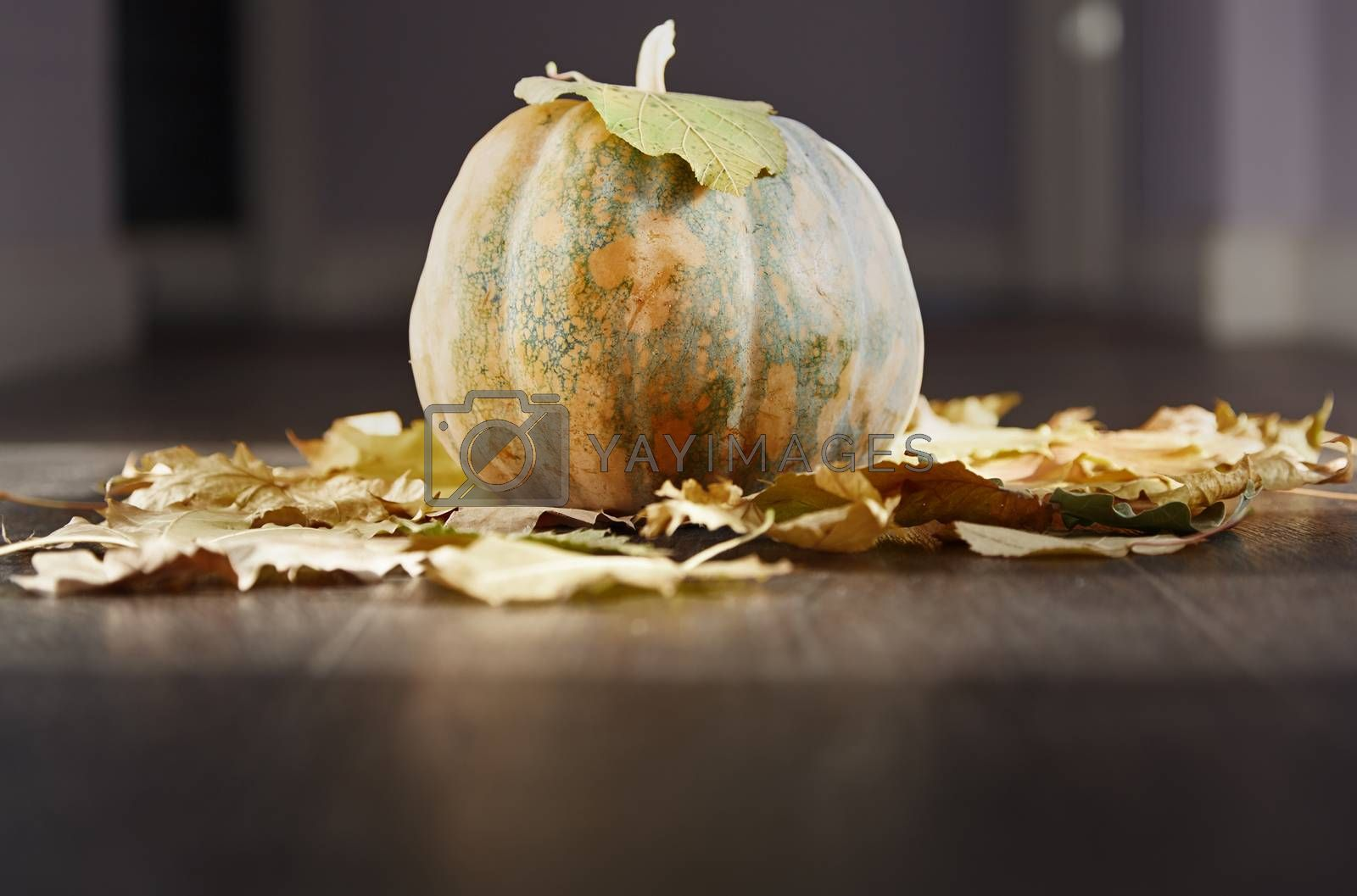 Halloween pumpkin at the hardwood floor with leave
