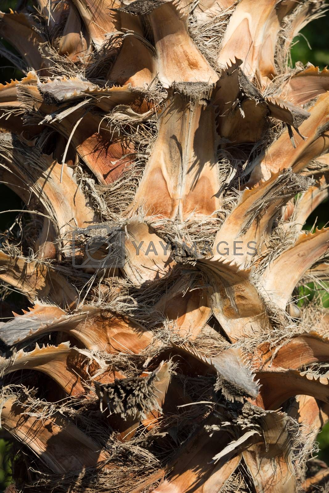 Palm tree trunk background, natural texture