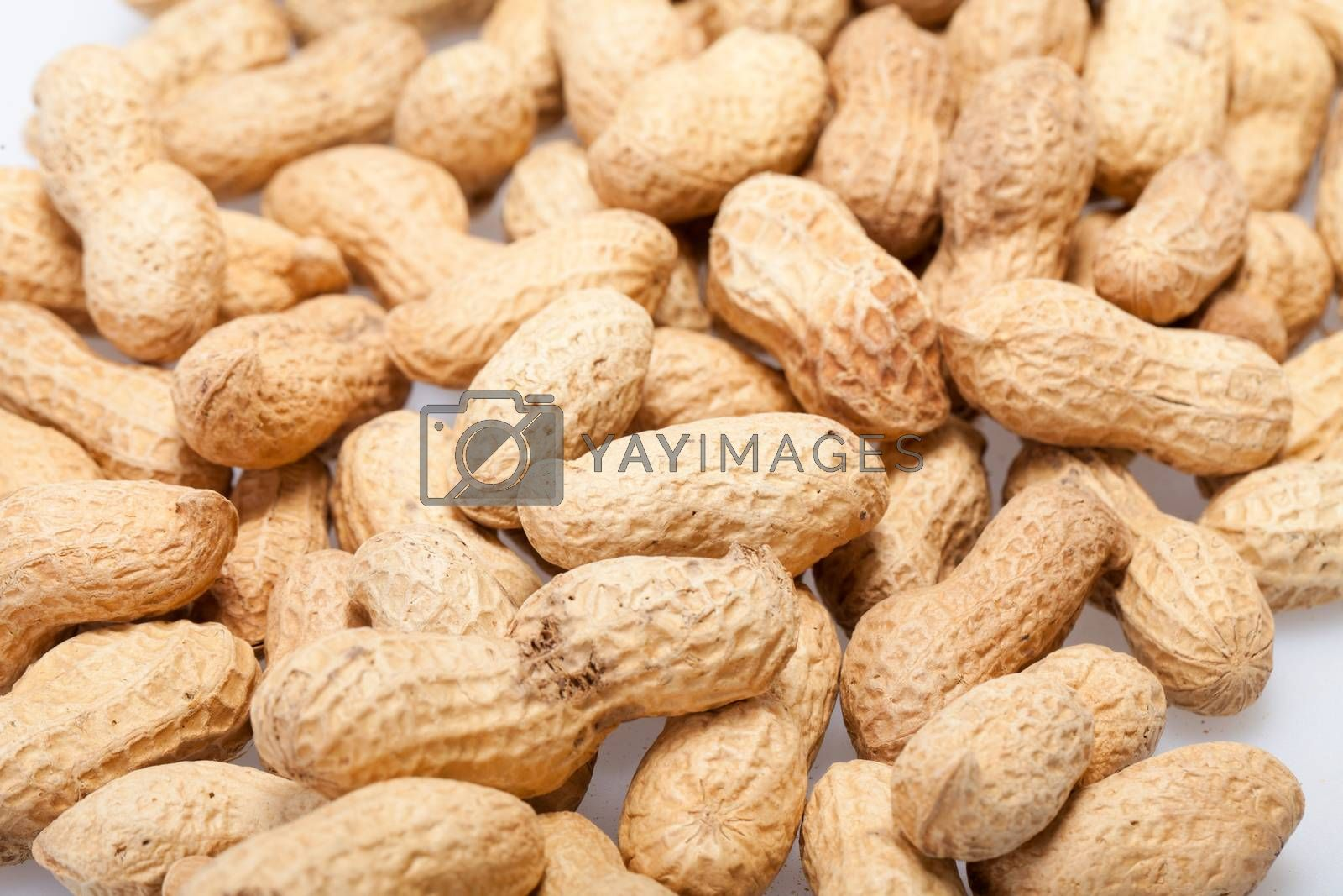 Dried peanuts in closeup on the white background