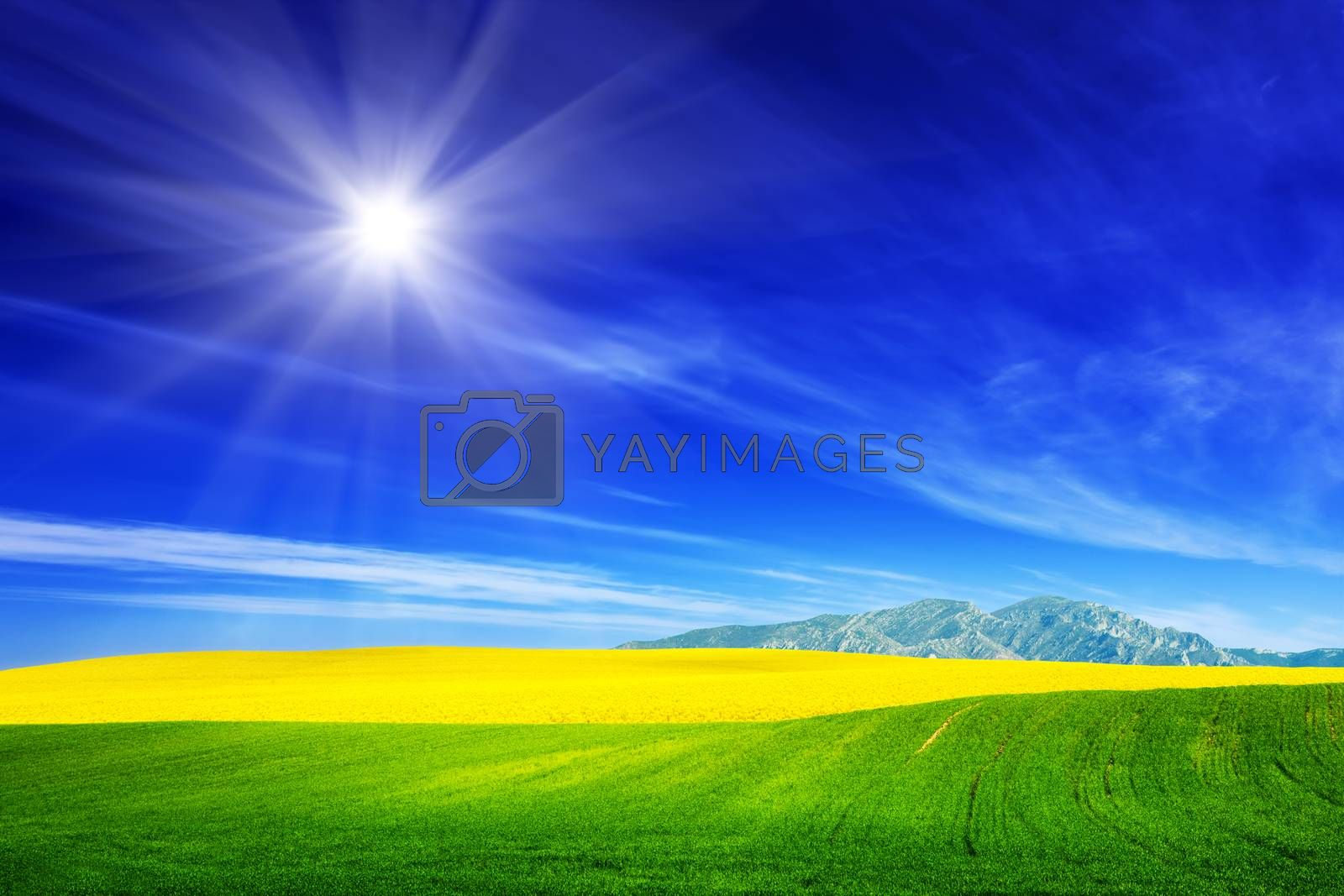 Royalty free image of Spring field of green grass and yellow flowers, rape. Blue sunny sky by photocreo