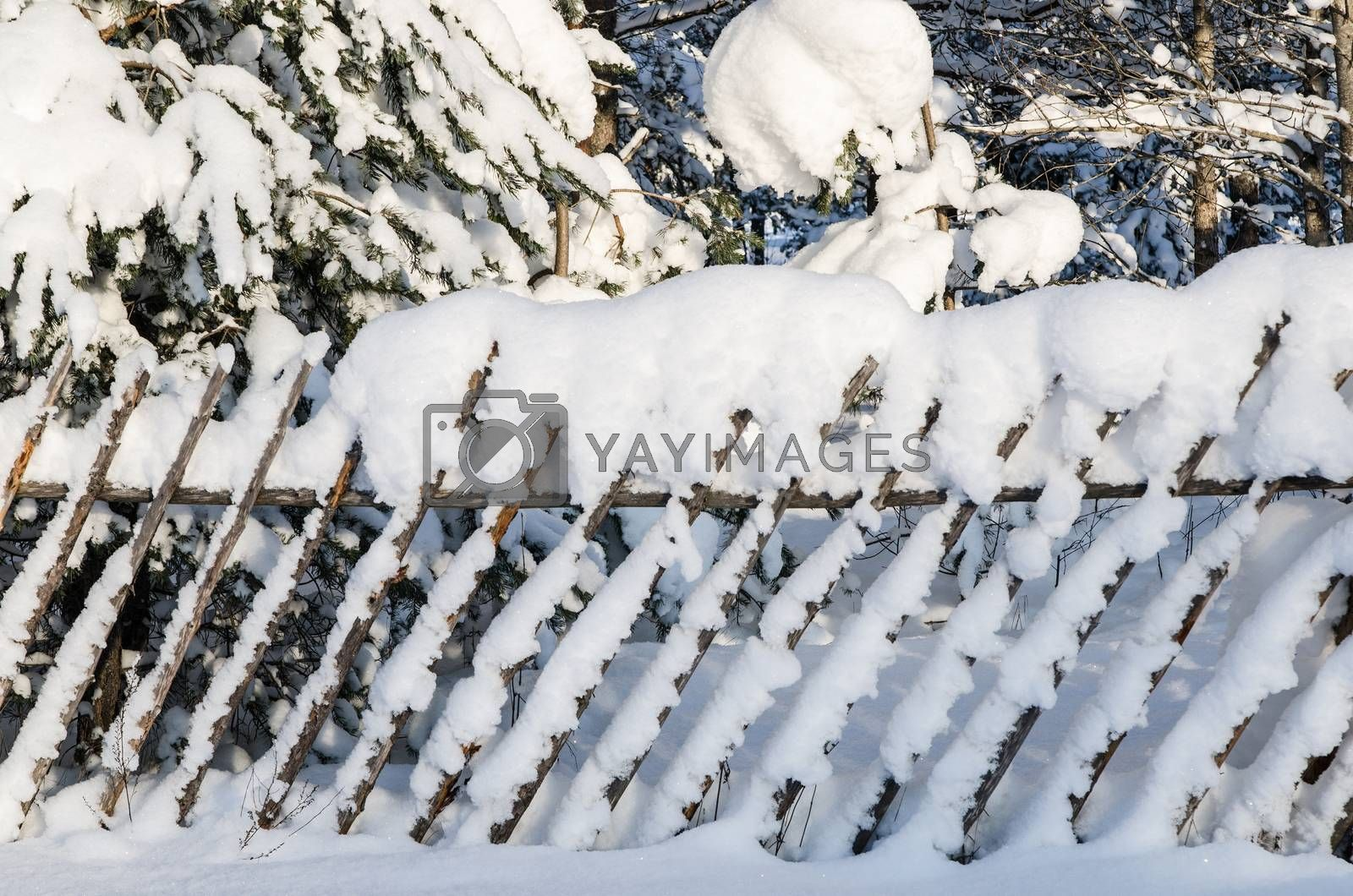 Royalty free image of The wooden fence filled up by a snow in a countryside. by breeze09
