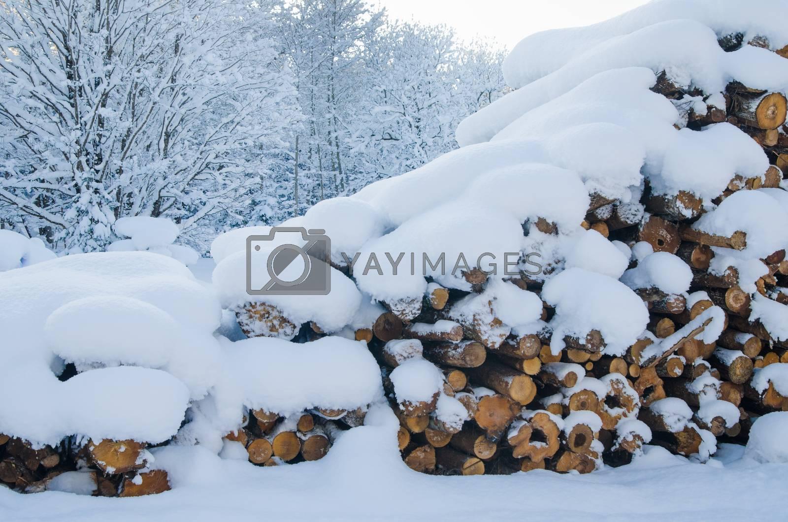 The cut logs in a winter wood under snowdrifts