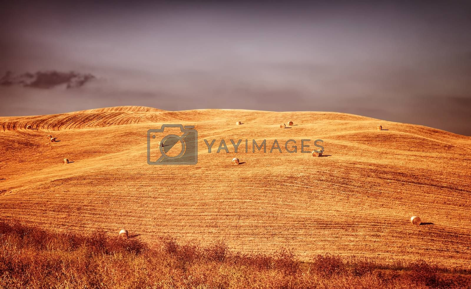 Beautiful autumn landscape, golden dry wheat field with haystack on it, rural agricultural panorama, harvest season concept