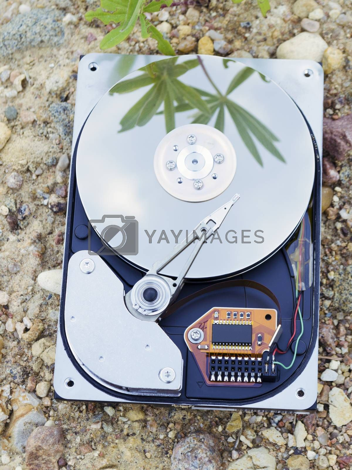 Hard Drive storage lays on the ground with sky and green plant reflection
