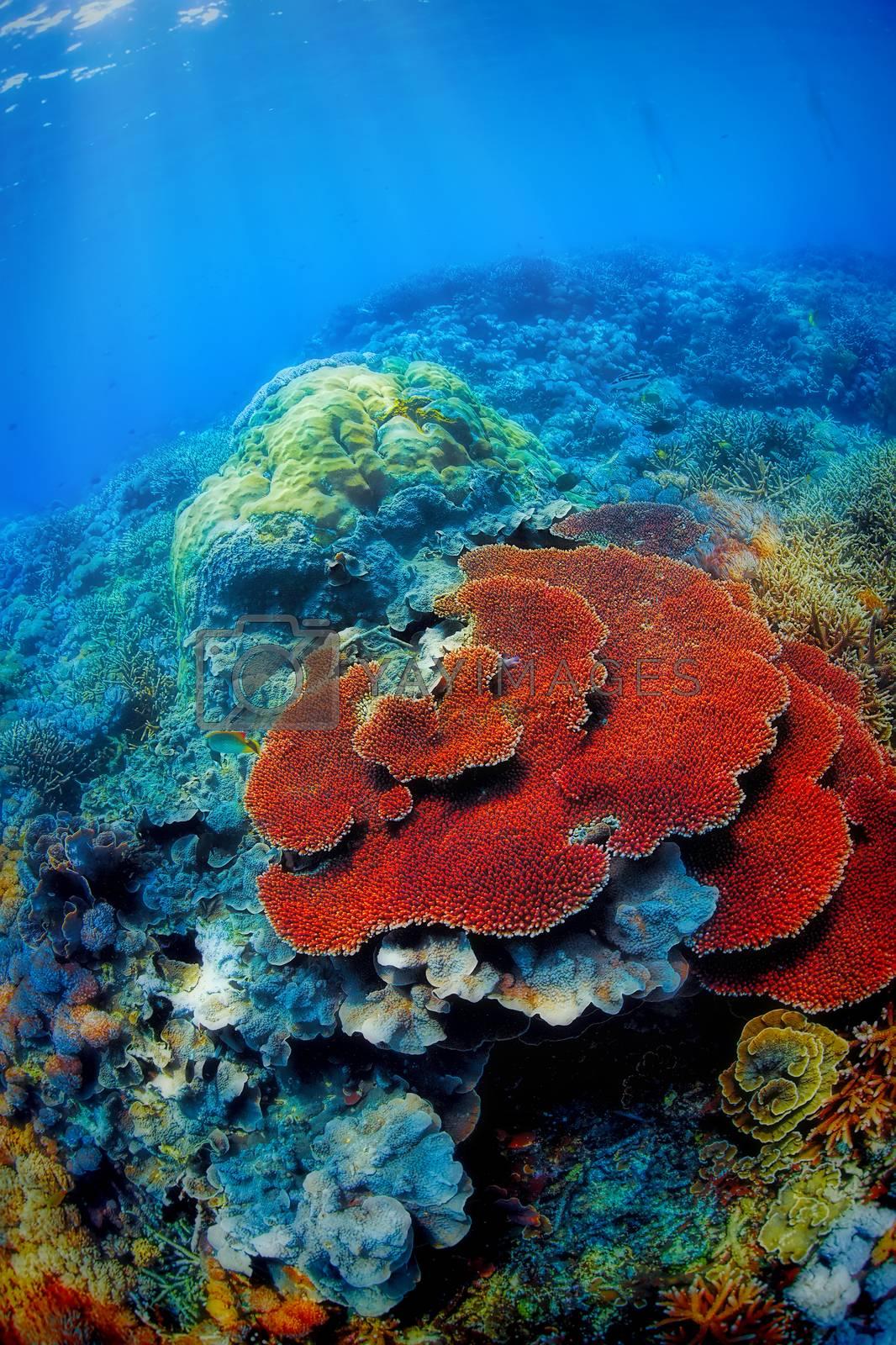 Royalty free image of Underwater landscape by kjorgen