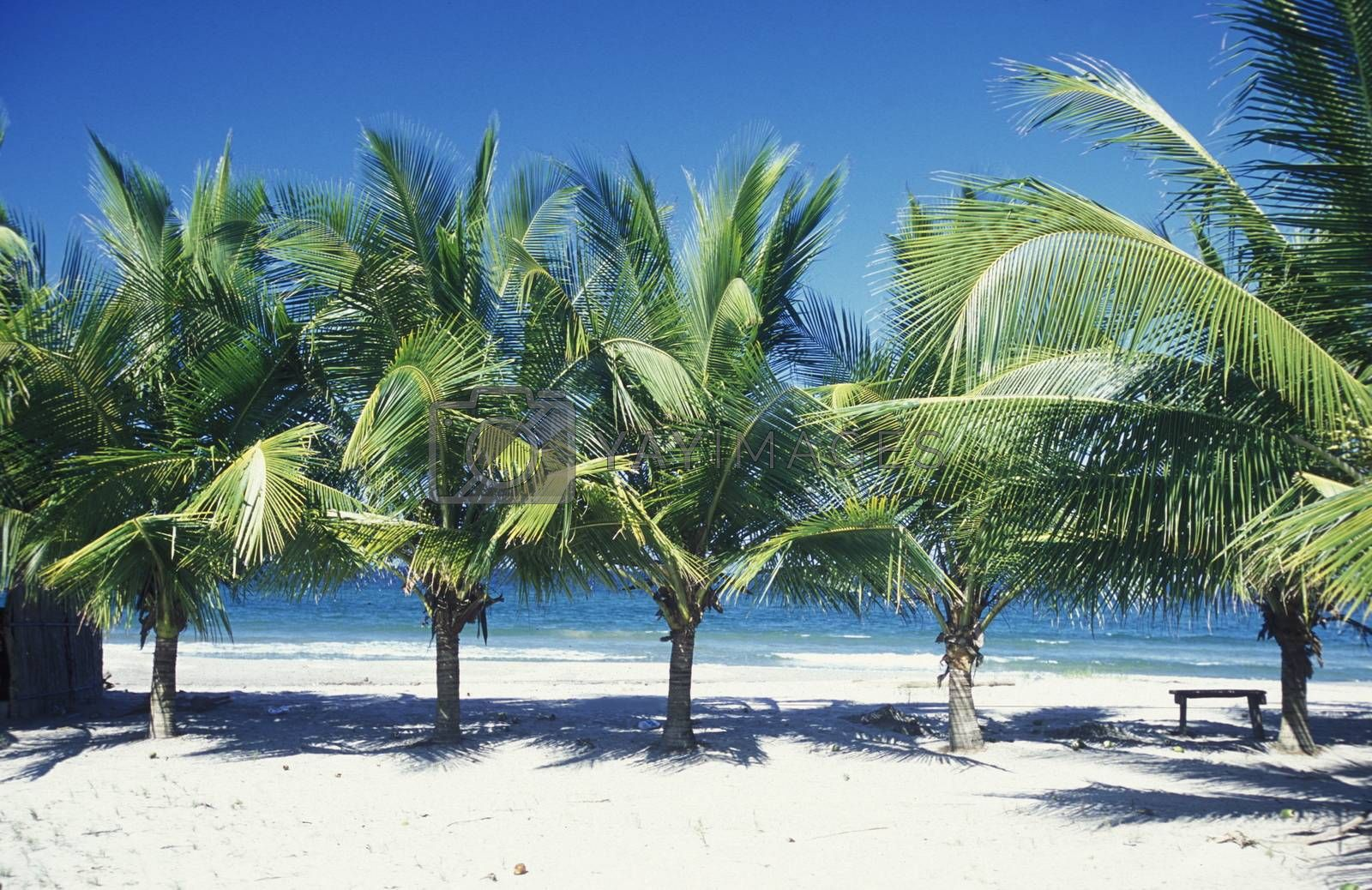 Royalty free image of LATIN AMERICA HONDURAS CARIBIAN SEA by urf