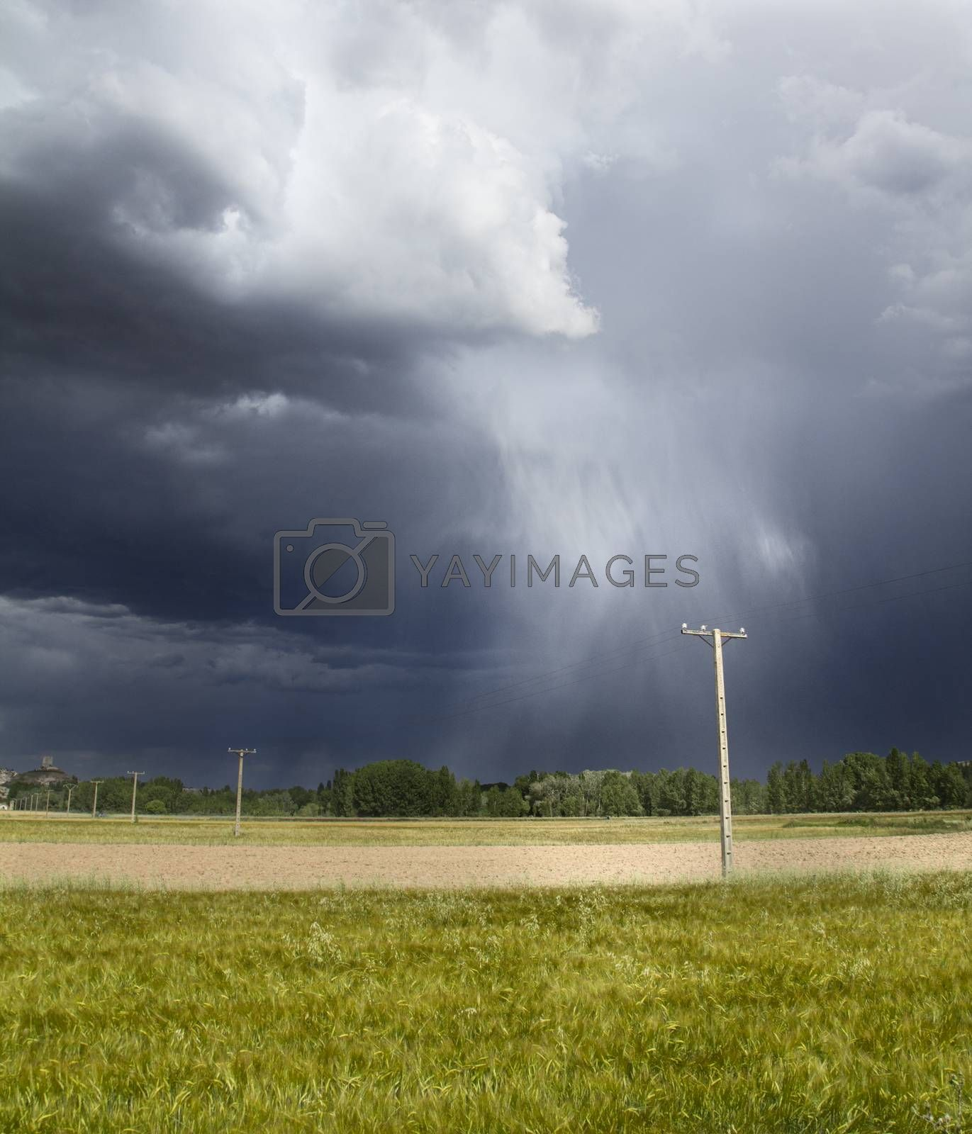 Black and cloudy sky during a storm in the green fields. The rain can be seen falling from the sky.