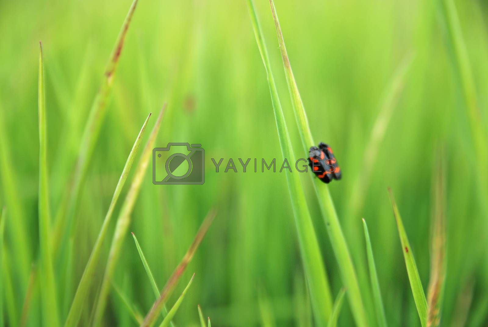 fresh grass with insects