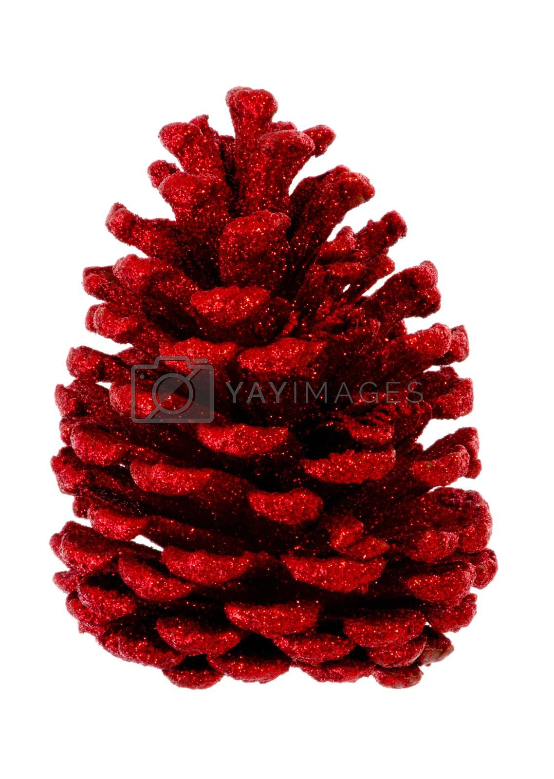 Red fir cone brightened