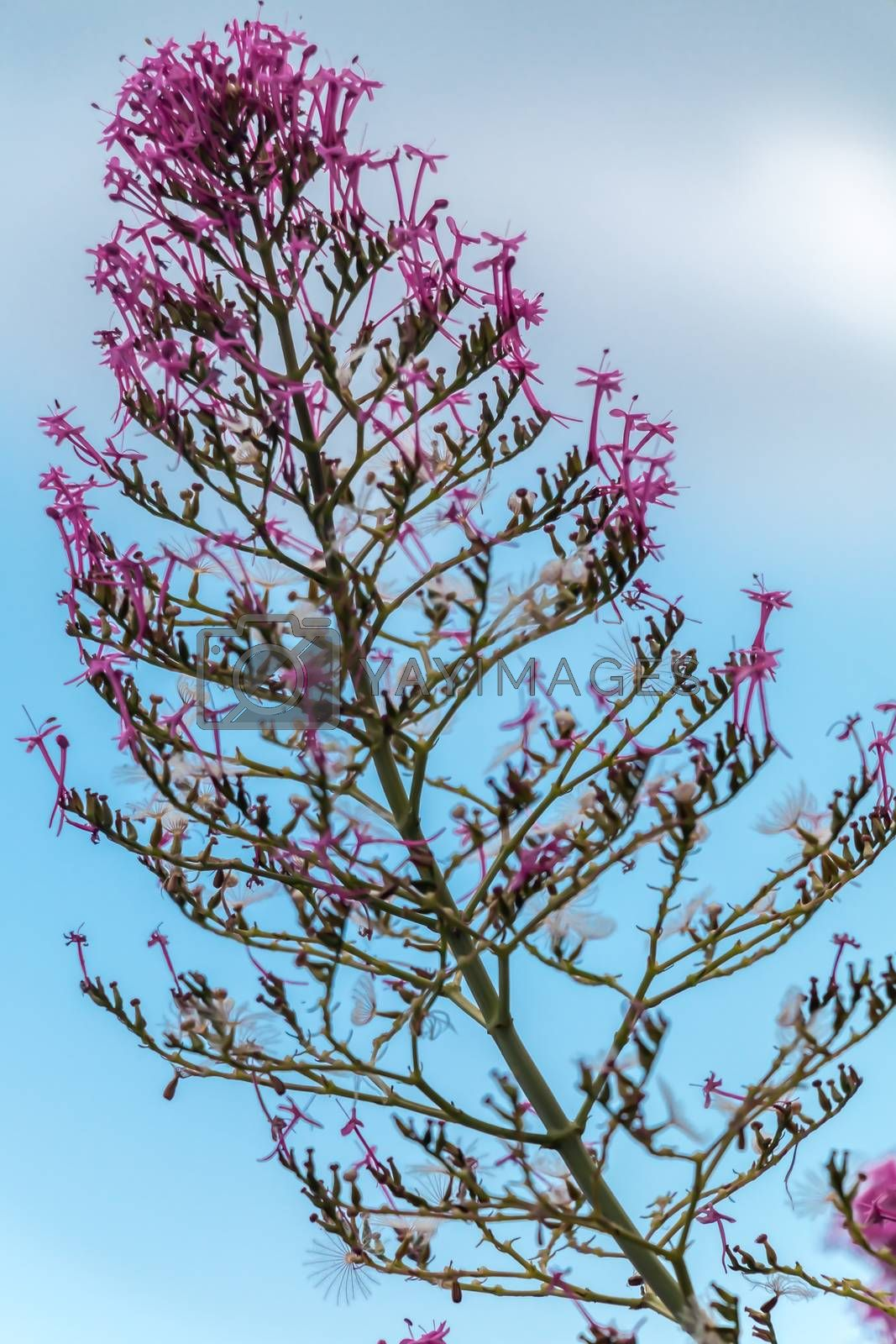 Small Plant on a blue background sky