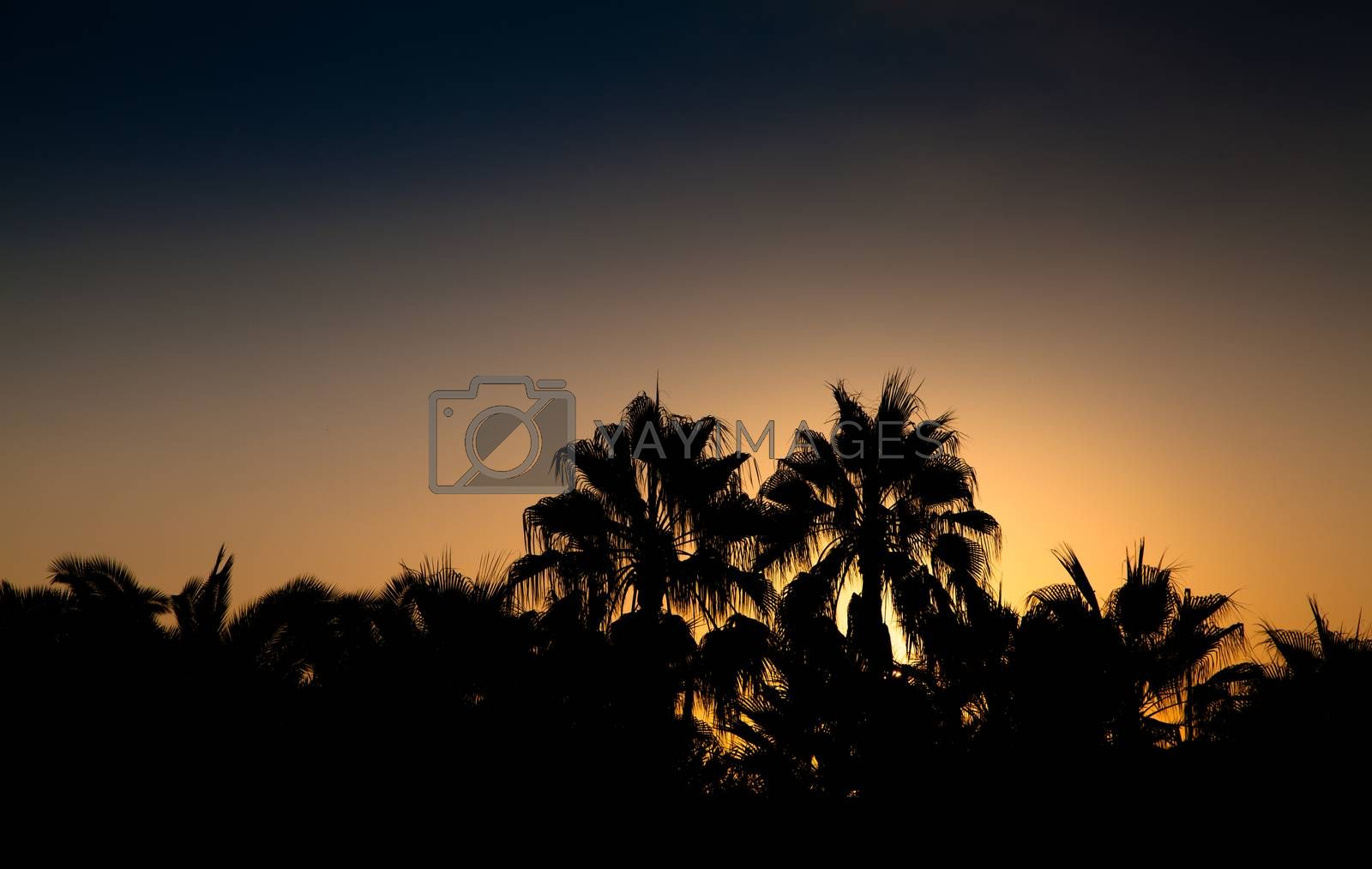 Sunset at a tropical beach with silhouettes of paml trees.