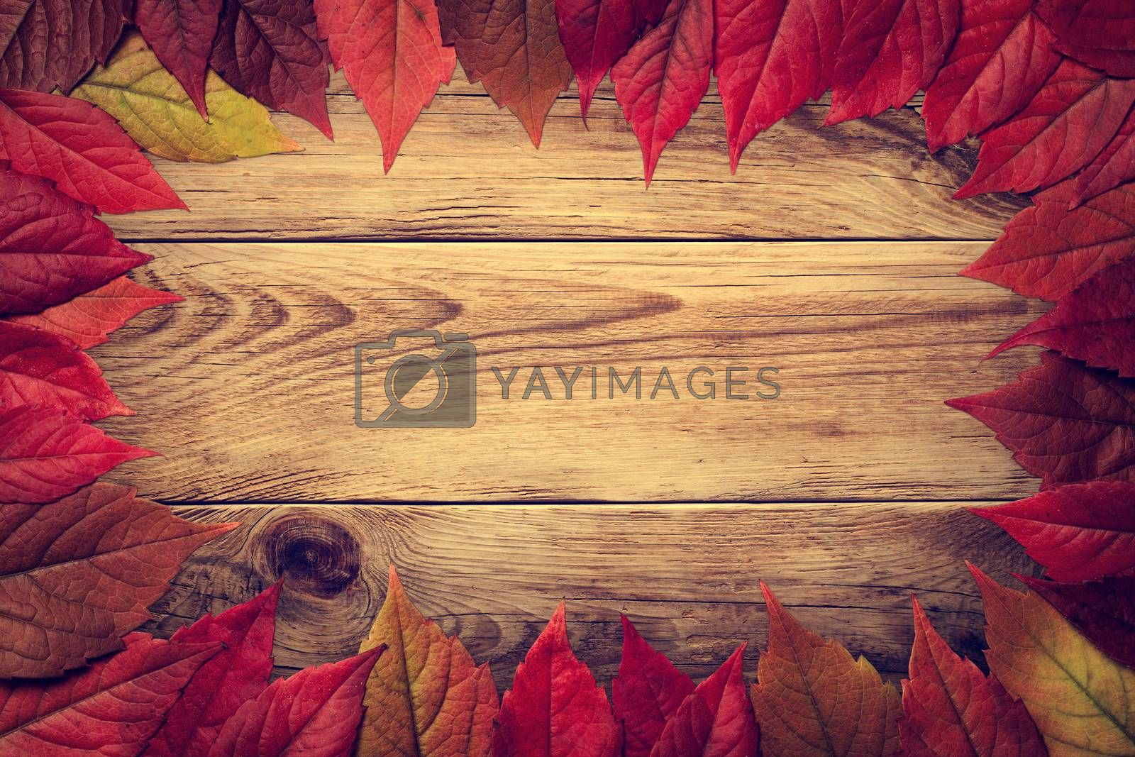 Autumn leaves frame on wooden background. Virginia creeper leaves. Vintage style. Top view