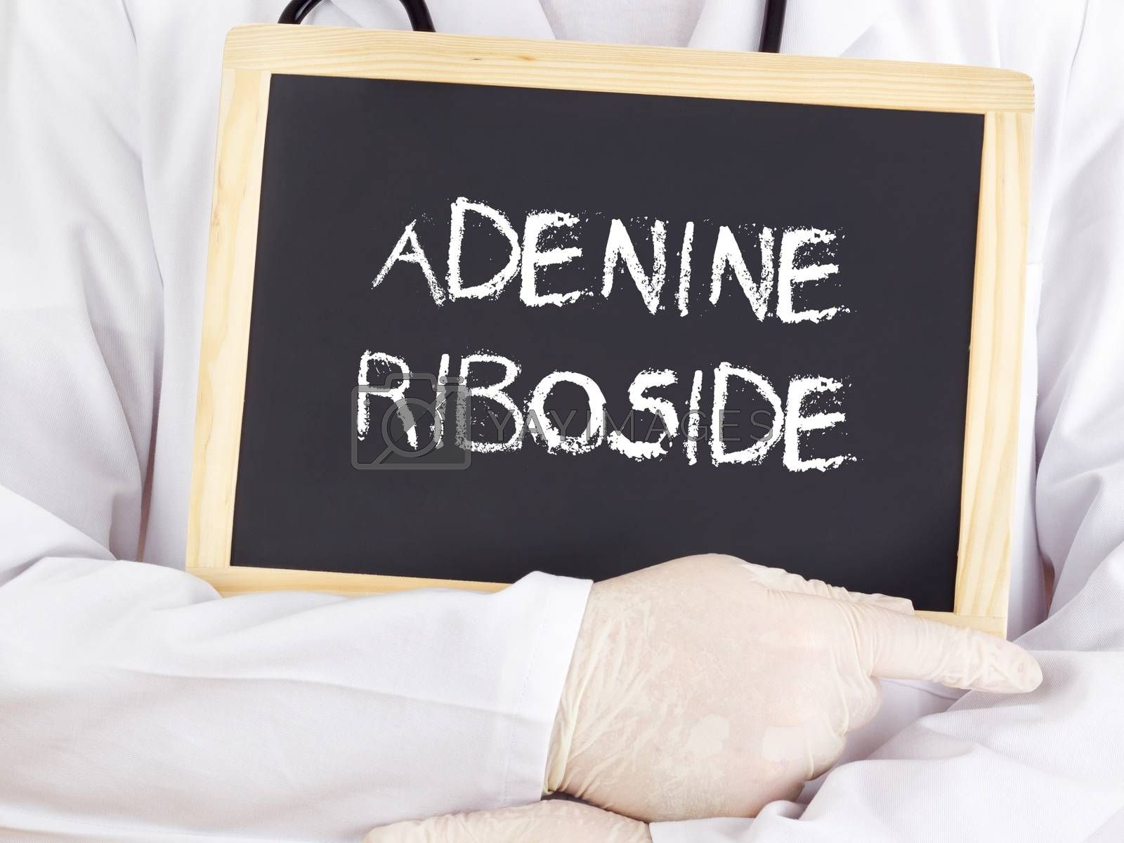 Royalty free image of Doctor shows information: adenine riboside by gwolters