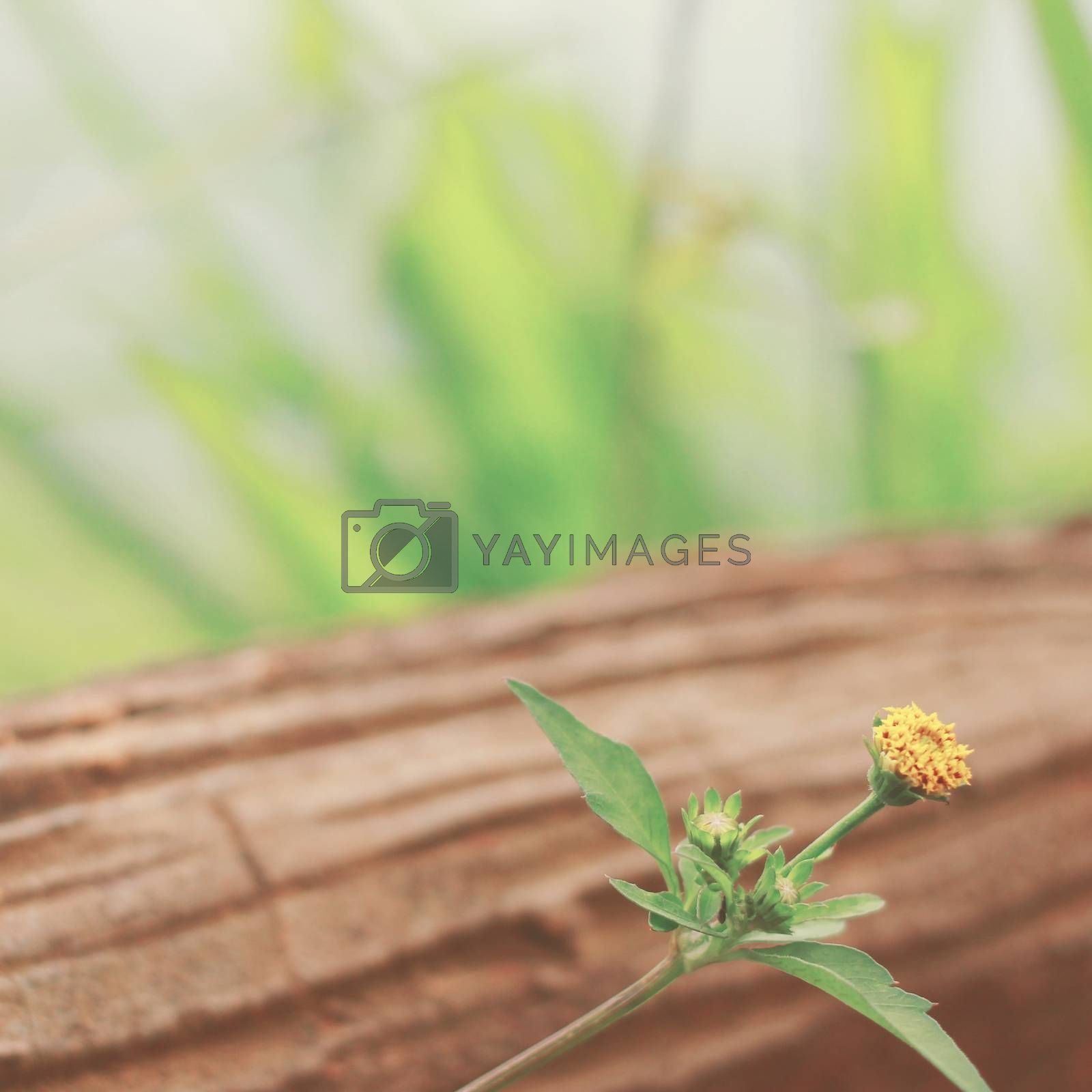Little yellow flower on wood with retro filter effect