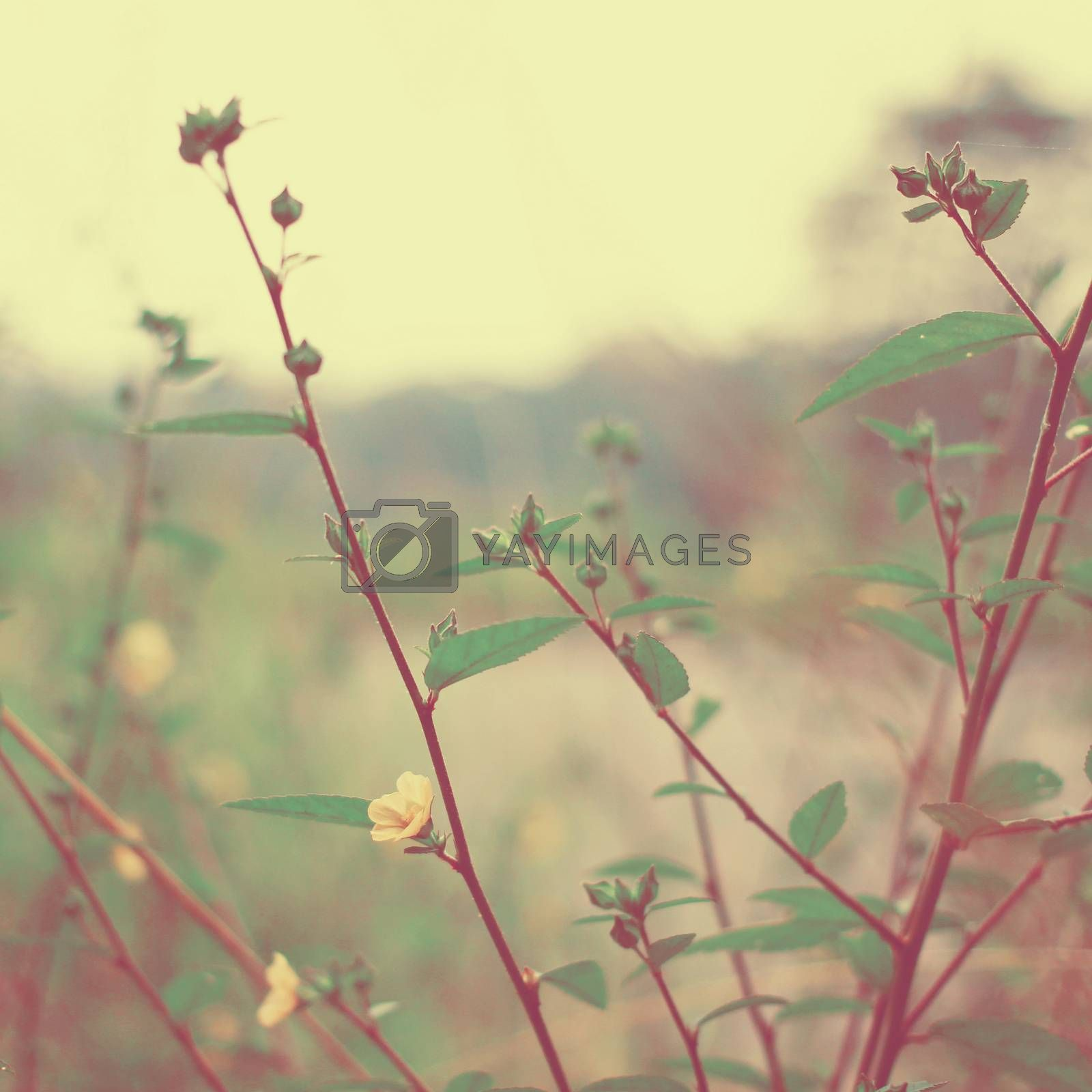 Vintage meadow flowers with retro filter effect