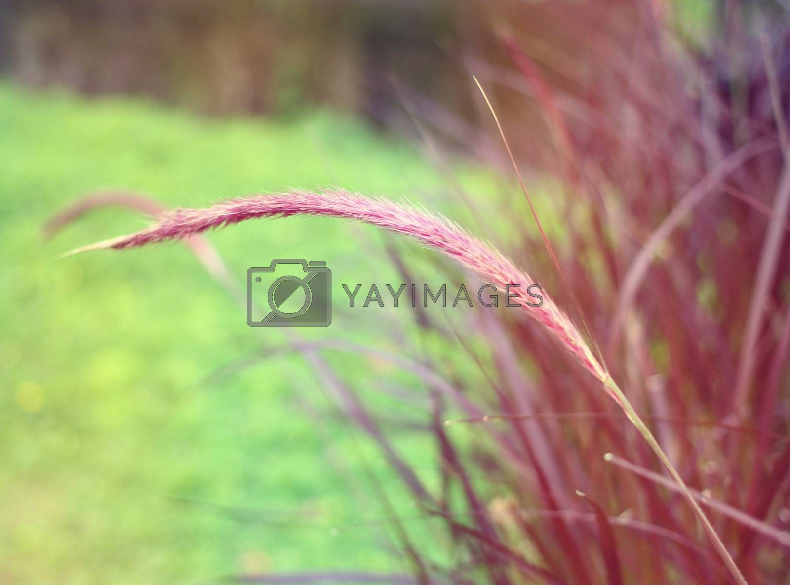 Close up of colorful grass field with retro filter effect