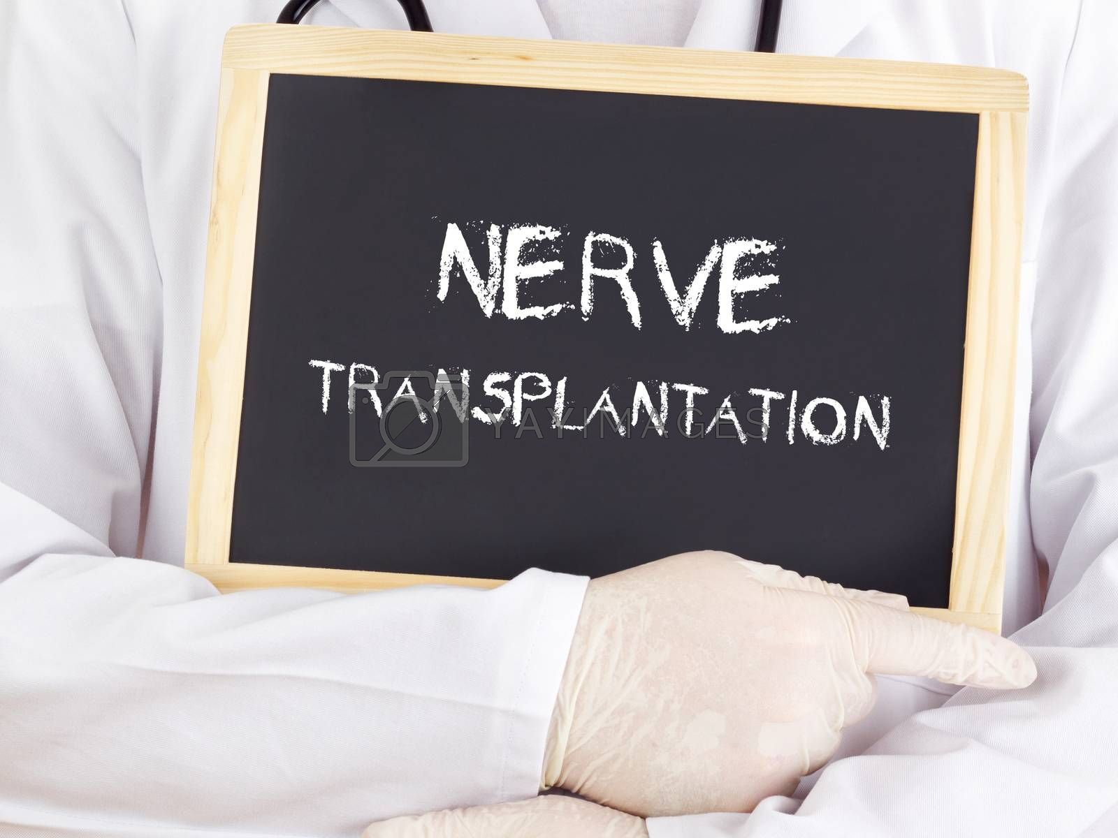 Royalty free image of Doctor shows information: nerve transplantation by gwolters