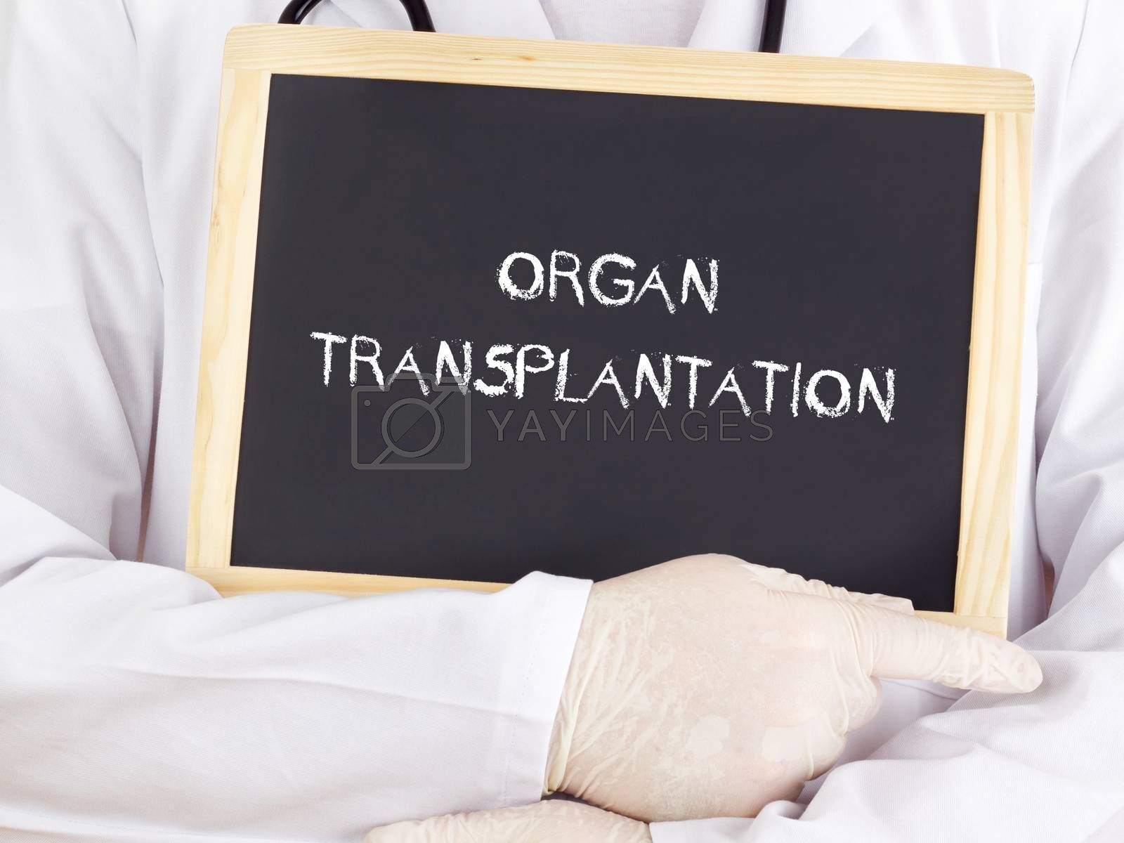 Royalty free image of Doctor shows information: organ transplantation by gwolters